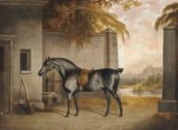 Black hunter in the stableyard