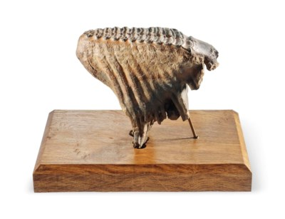 A MAMMOTH TOOTH