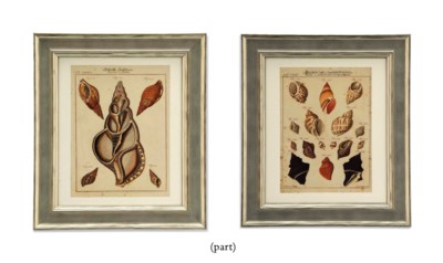FIFTEEN ENGRAVINGS OF SHELLS