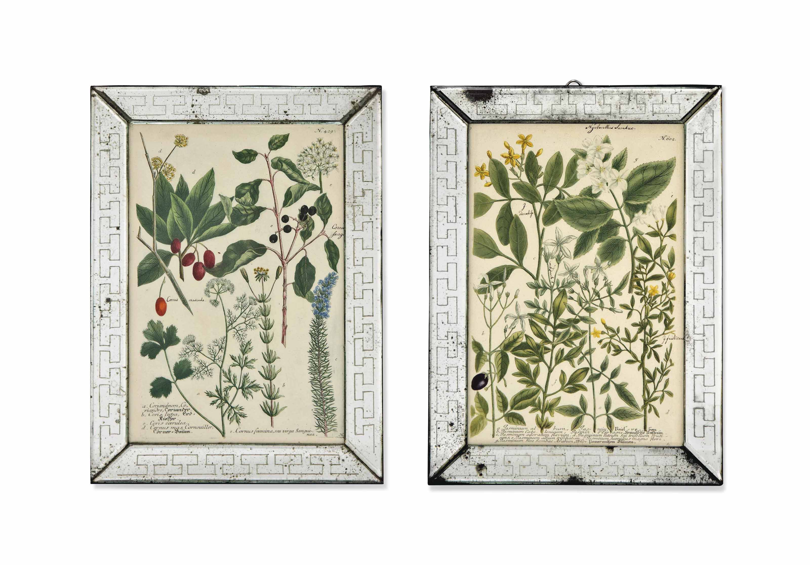TWELVE HAND-COLOURED BOTANICAL ENGRAVINGS