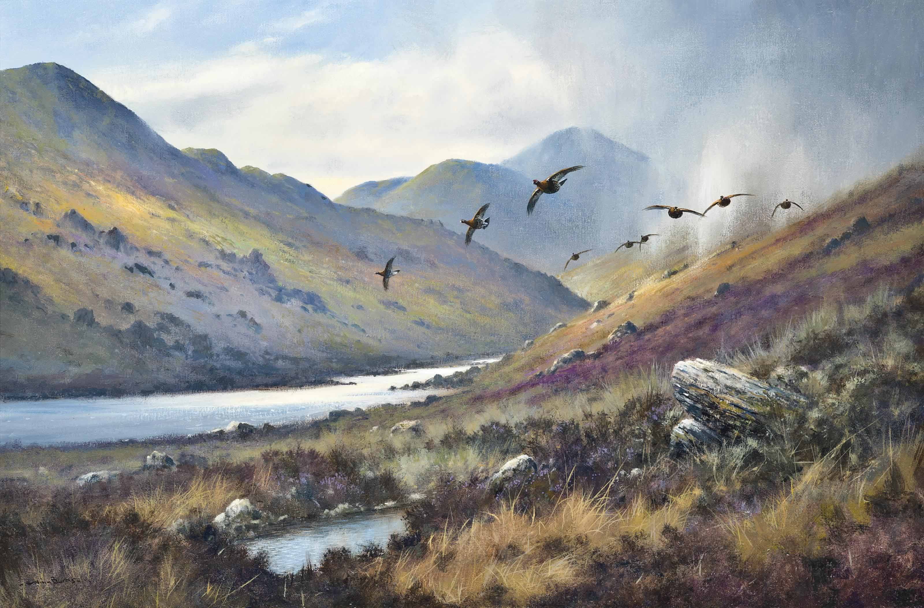 Red grouse, Loch Mallardoch, Scotland