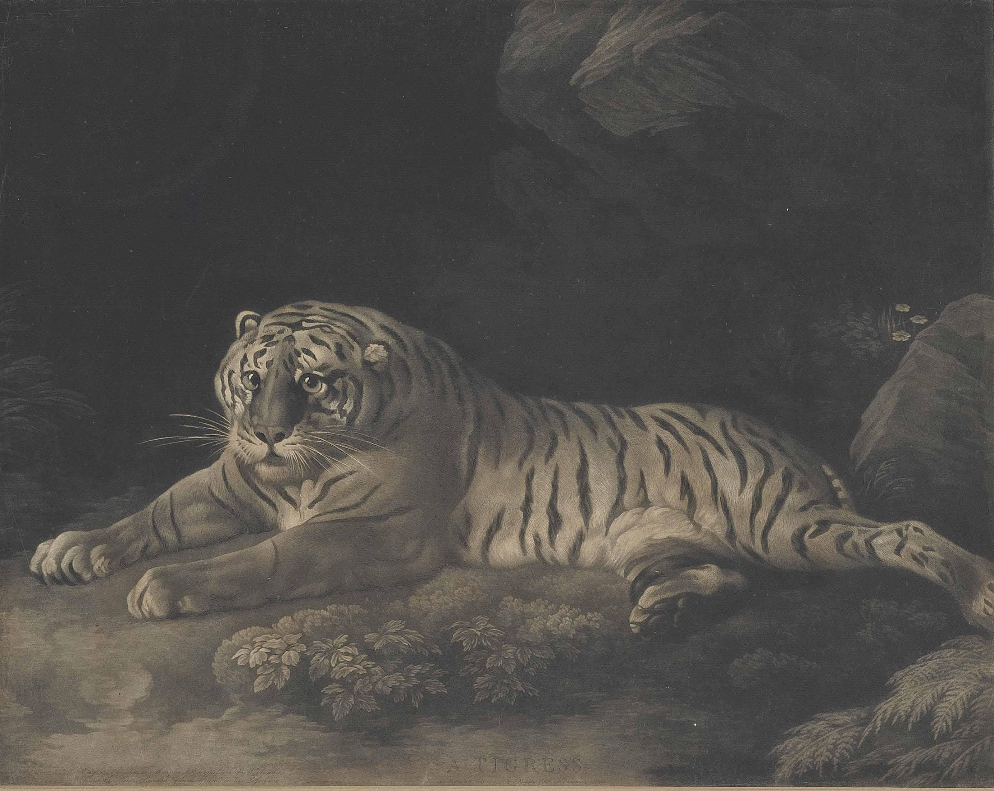 A Tigress (Lennox-Boyd 133)