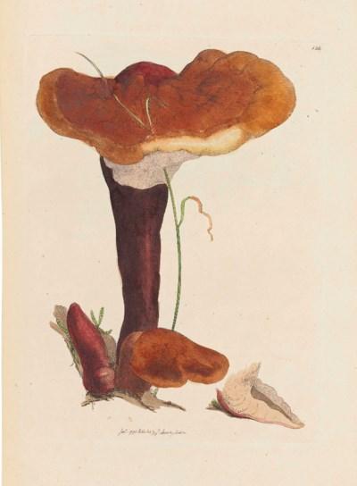 JAMES SOWERBY (1757-1822)