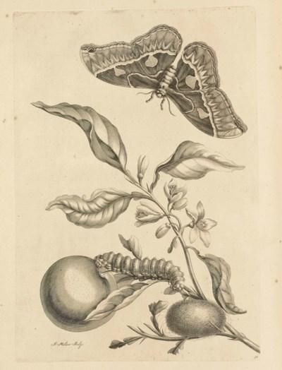 MARIA SIBYLLA MERIAN (1647-171