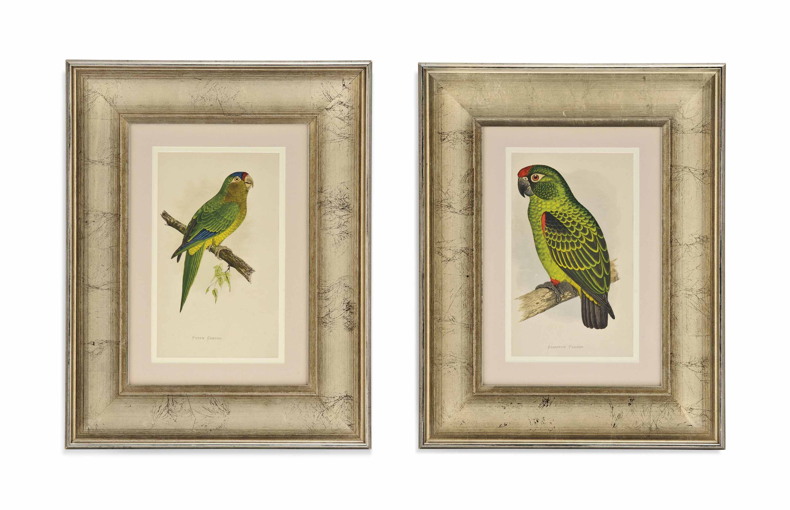TWELVE COLOURED ENGRAVINGS OF PARROTS