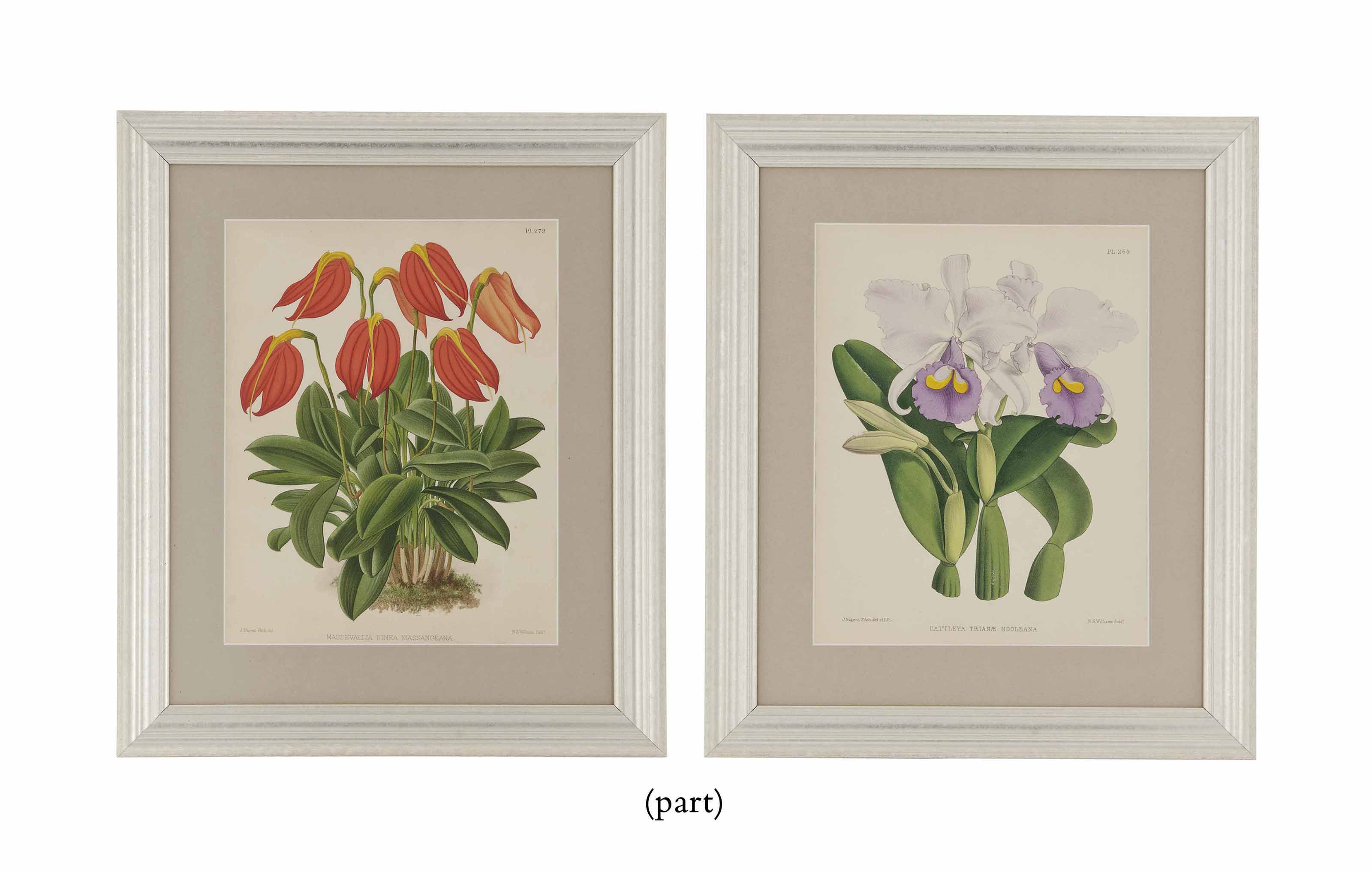 TWELVE HAND-COLOURED LITHOGRAPHS FROM THE ORCHID ALBUM EDITED BY ROBERT WARNER