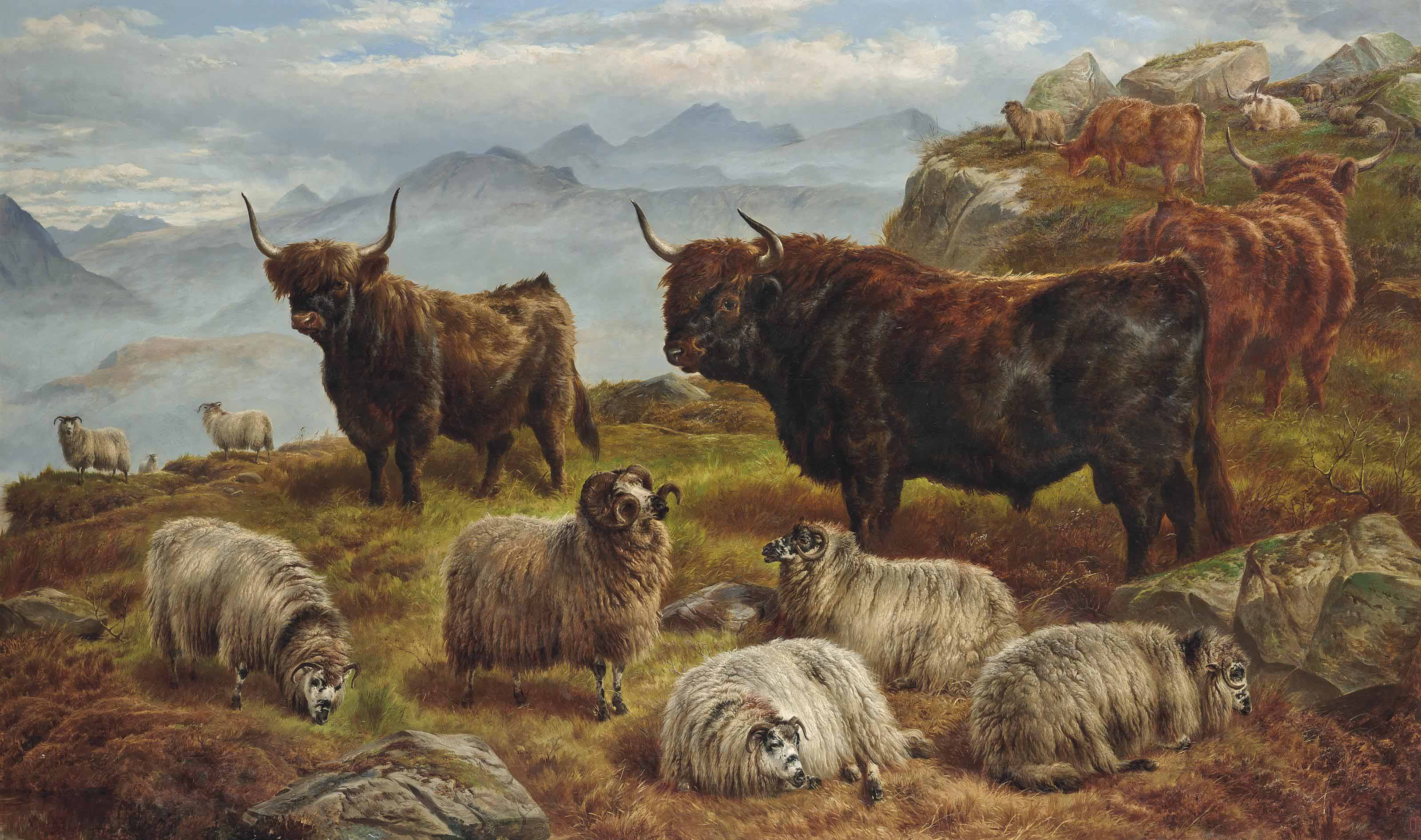 Highland cattle and sheep grazing