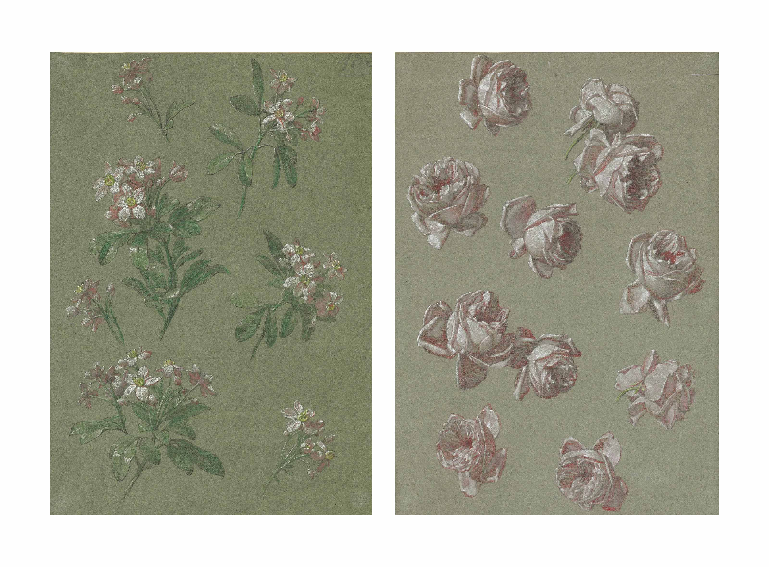 Studies of pink roses; and Studies of oleander