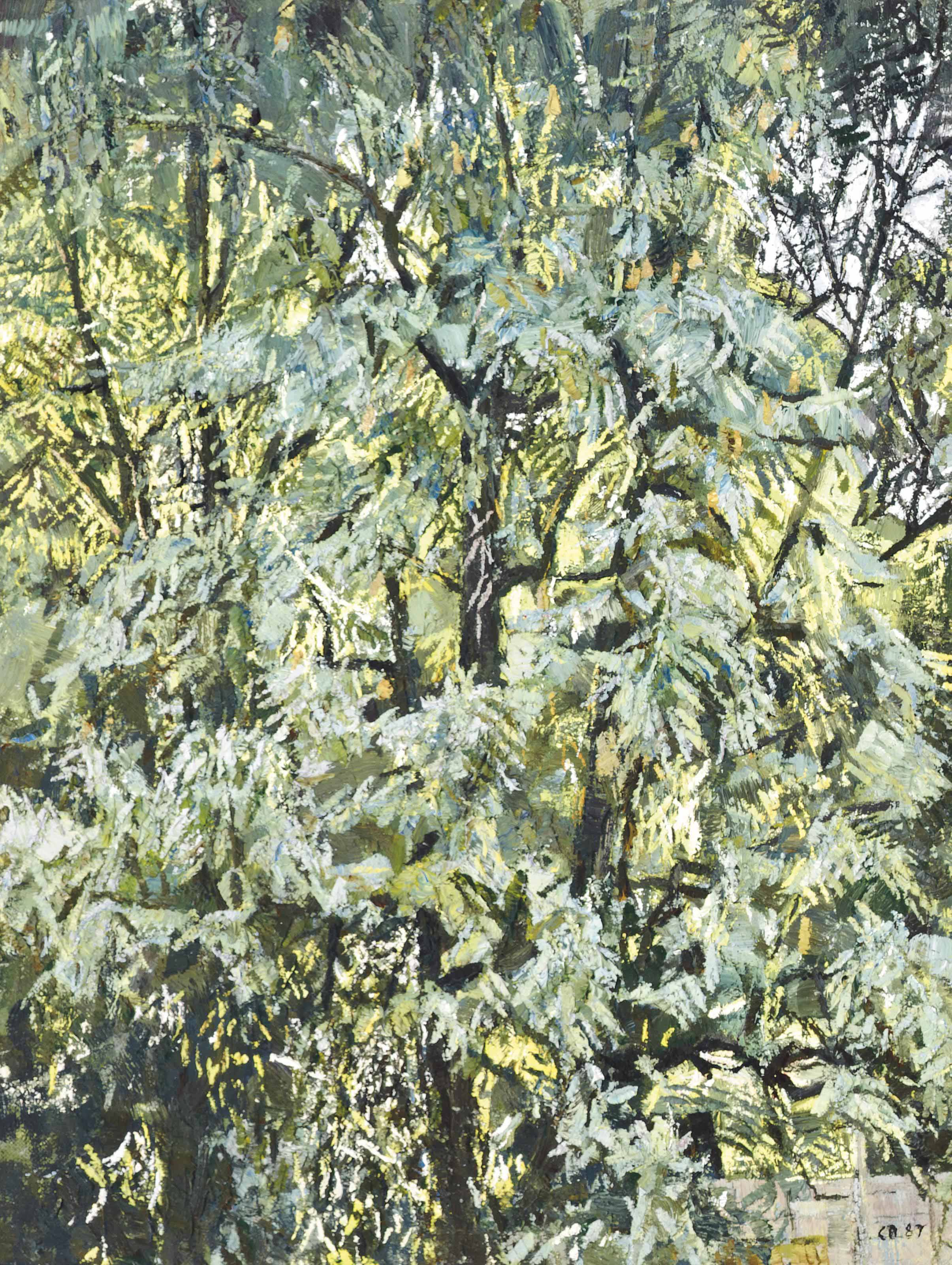 Pear Tree, September Morning