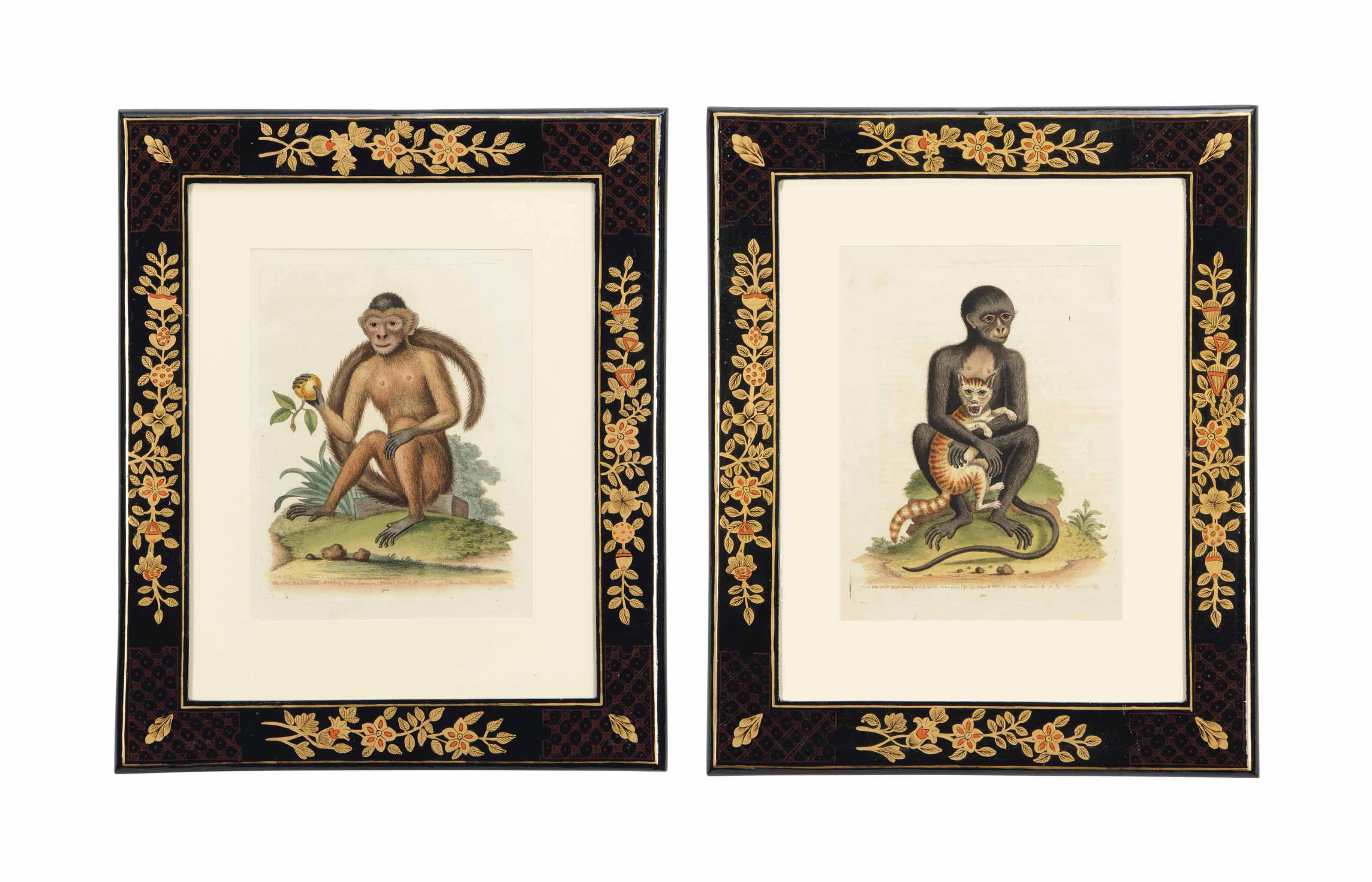 TWELVE COLOURED ENGRAVINGS OF MONKEYS