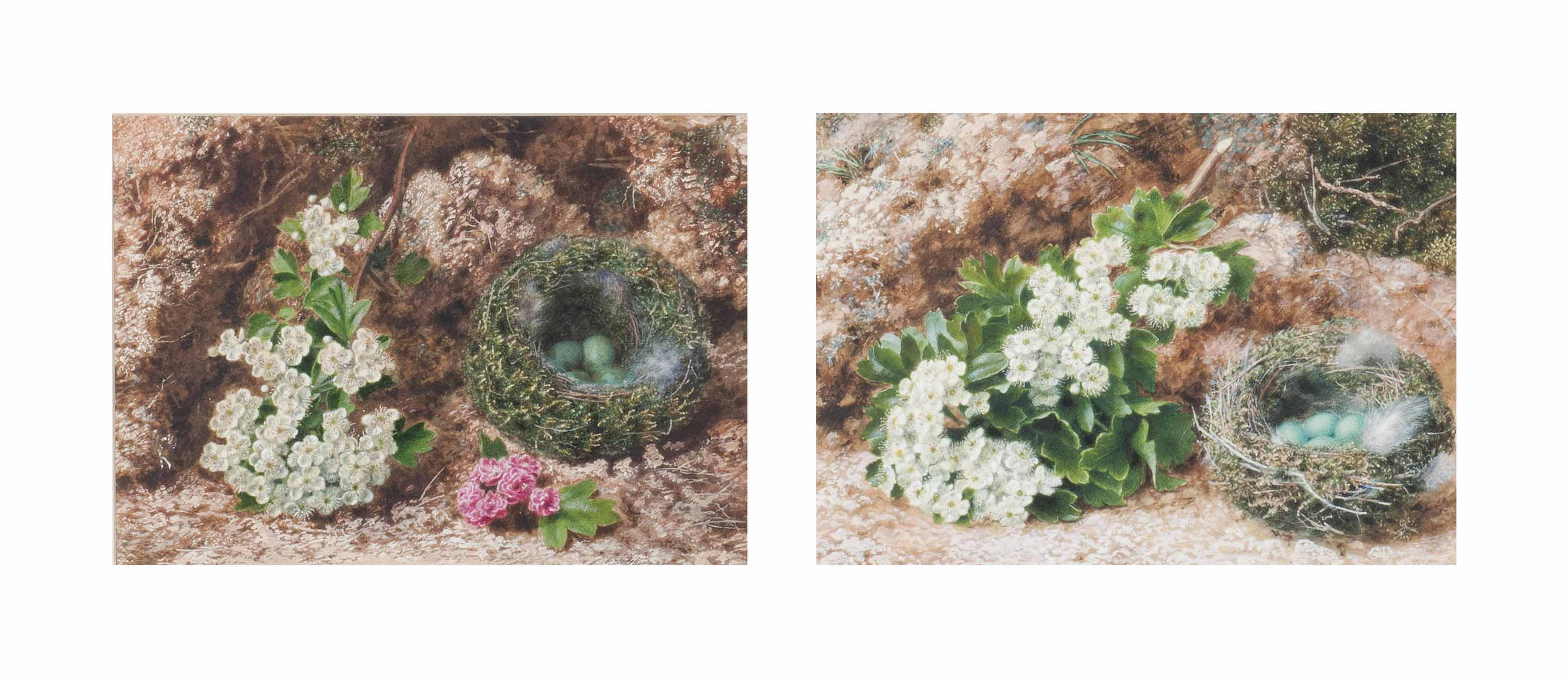 A pair of still life's of Bird's Nest's with wayside flowers