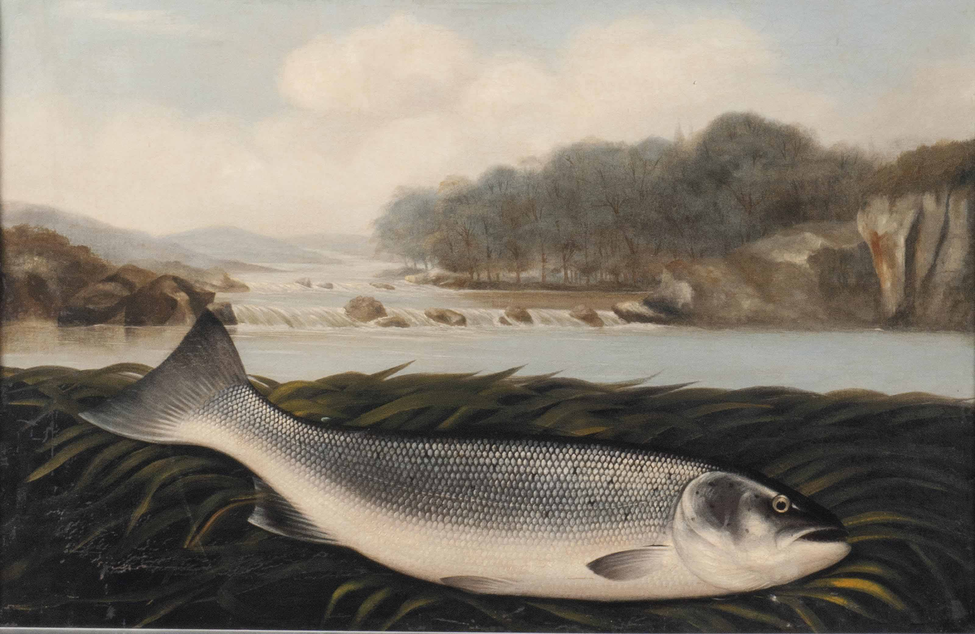 Study of a fish on a river near a wier