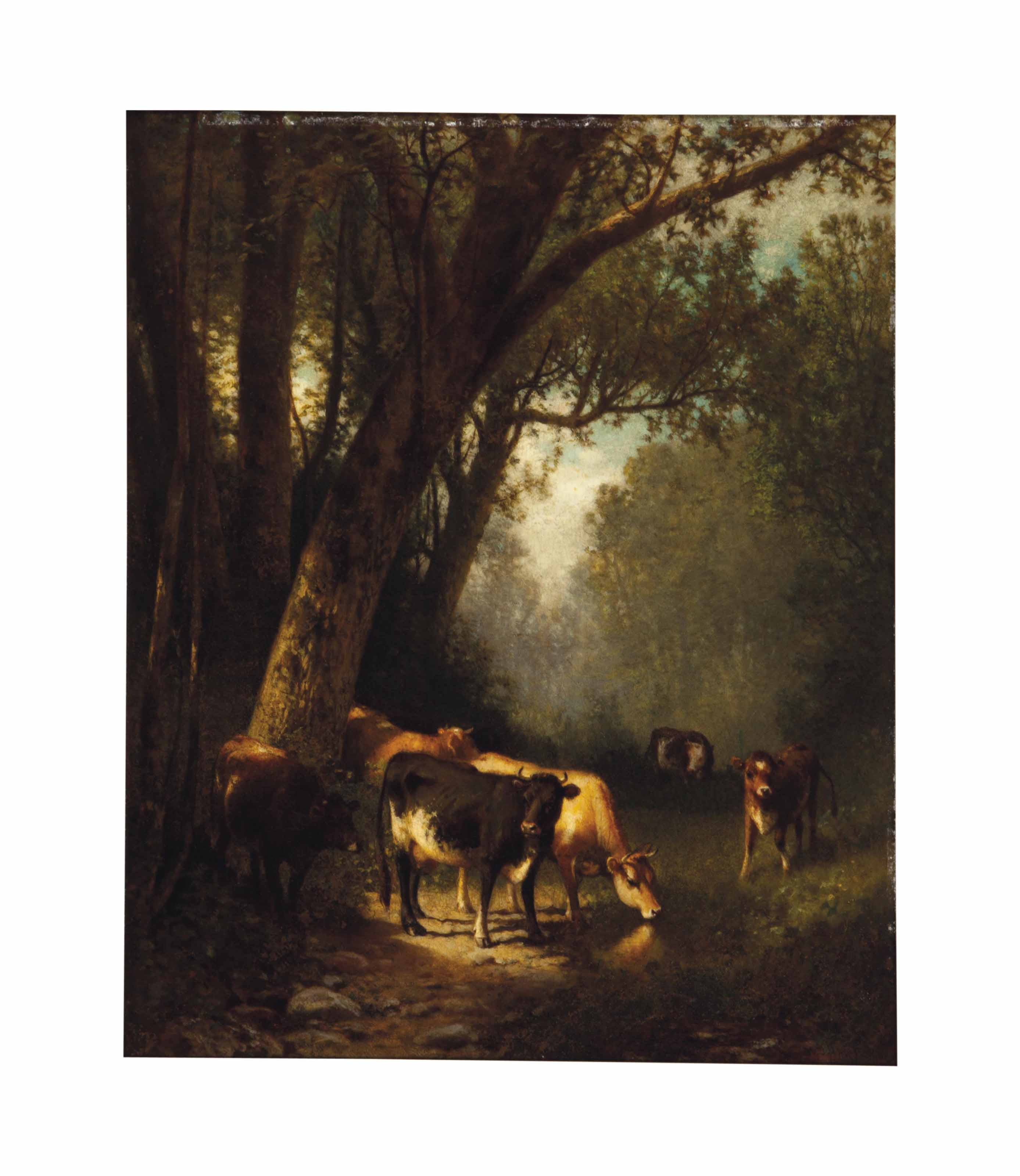 Cows grazing in the forest clearing