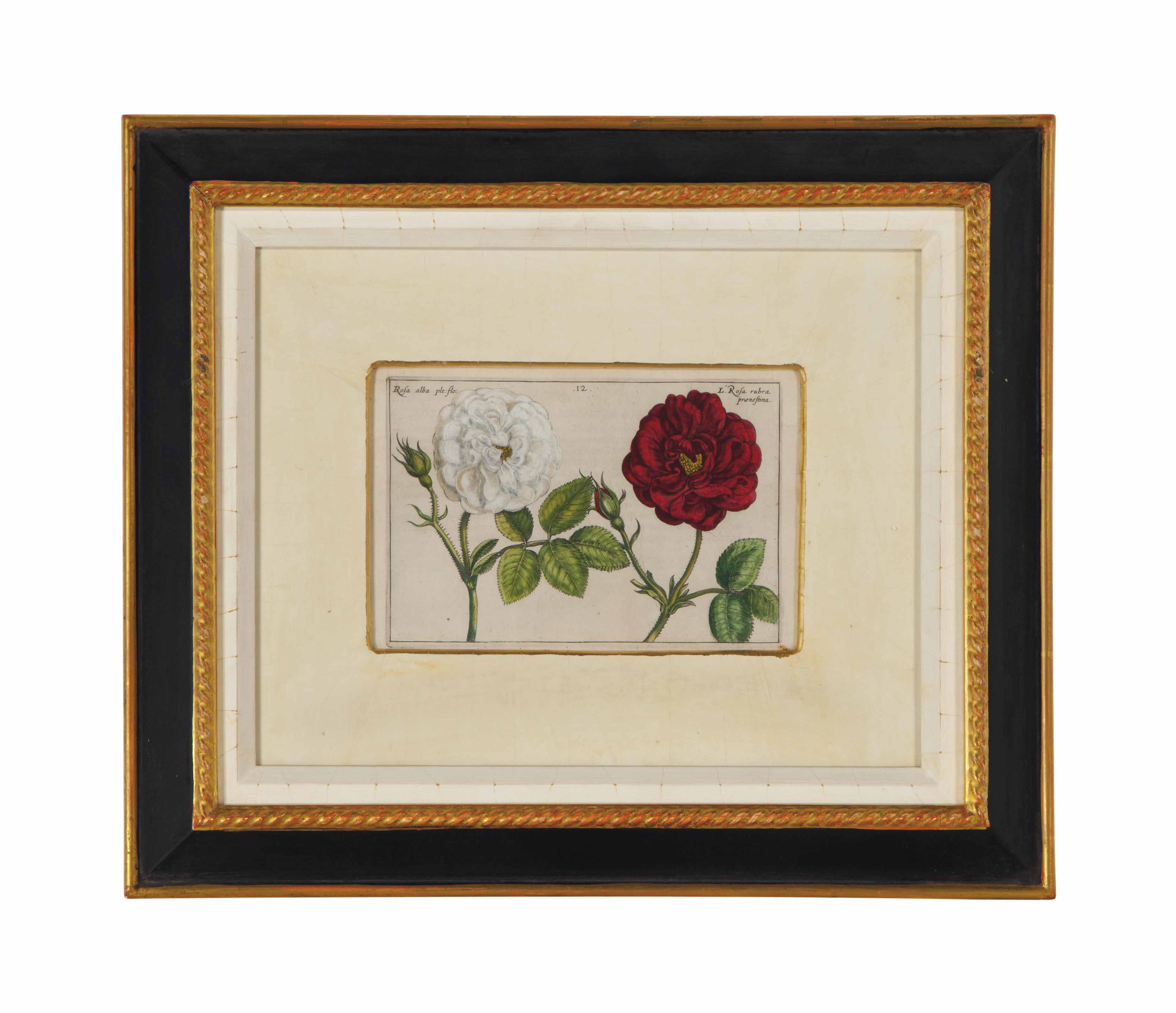 FOUR ETCHINGS WITH HAND COLORING FROM HORTUS FLORIDUS,