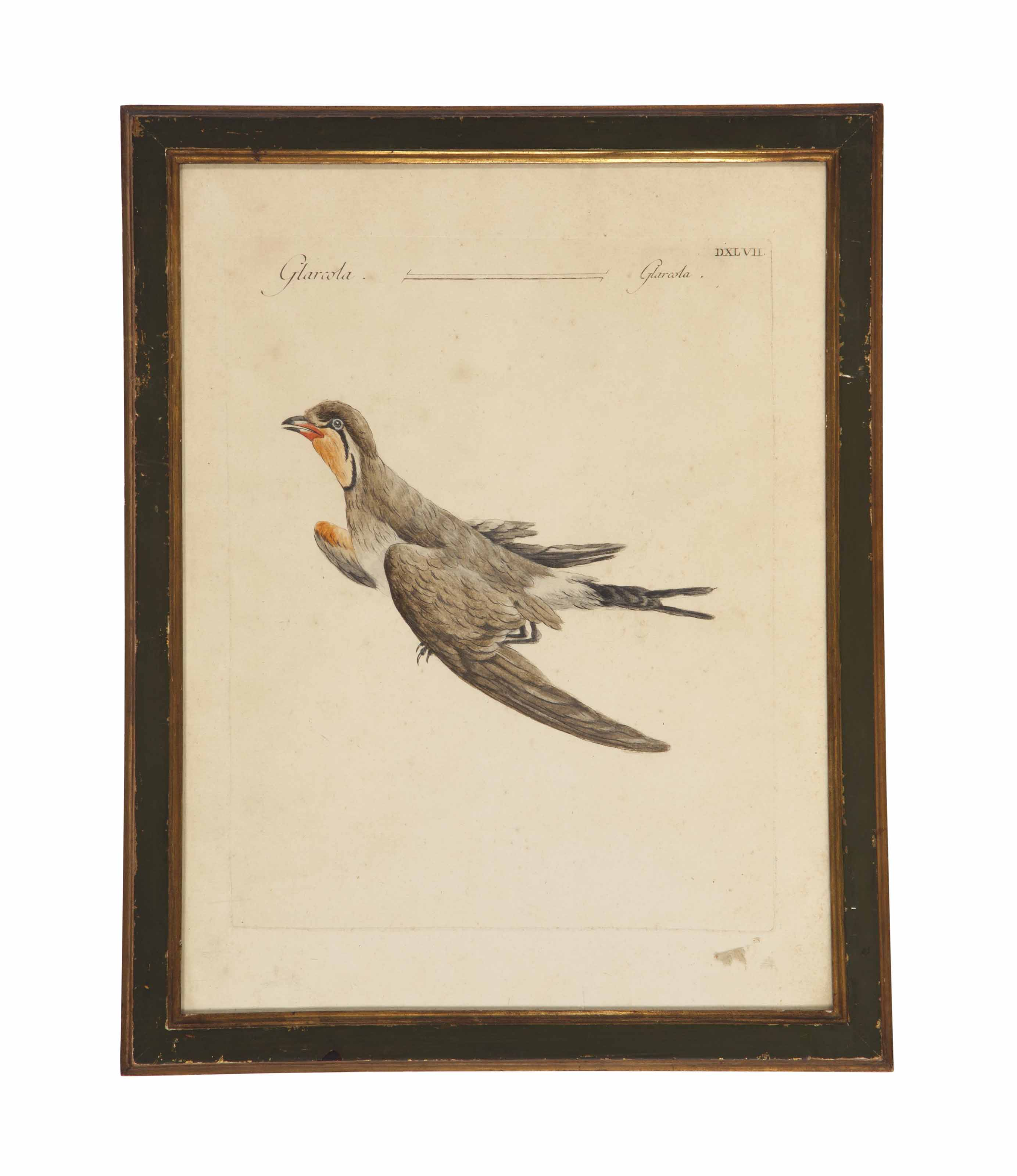 A SET OF SIX CONTINENTAL HAND COLORED ENGRAVINGS OF BIRDS,