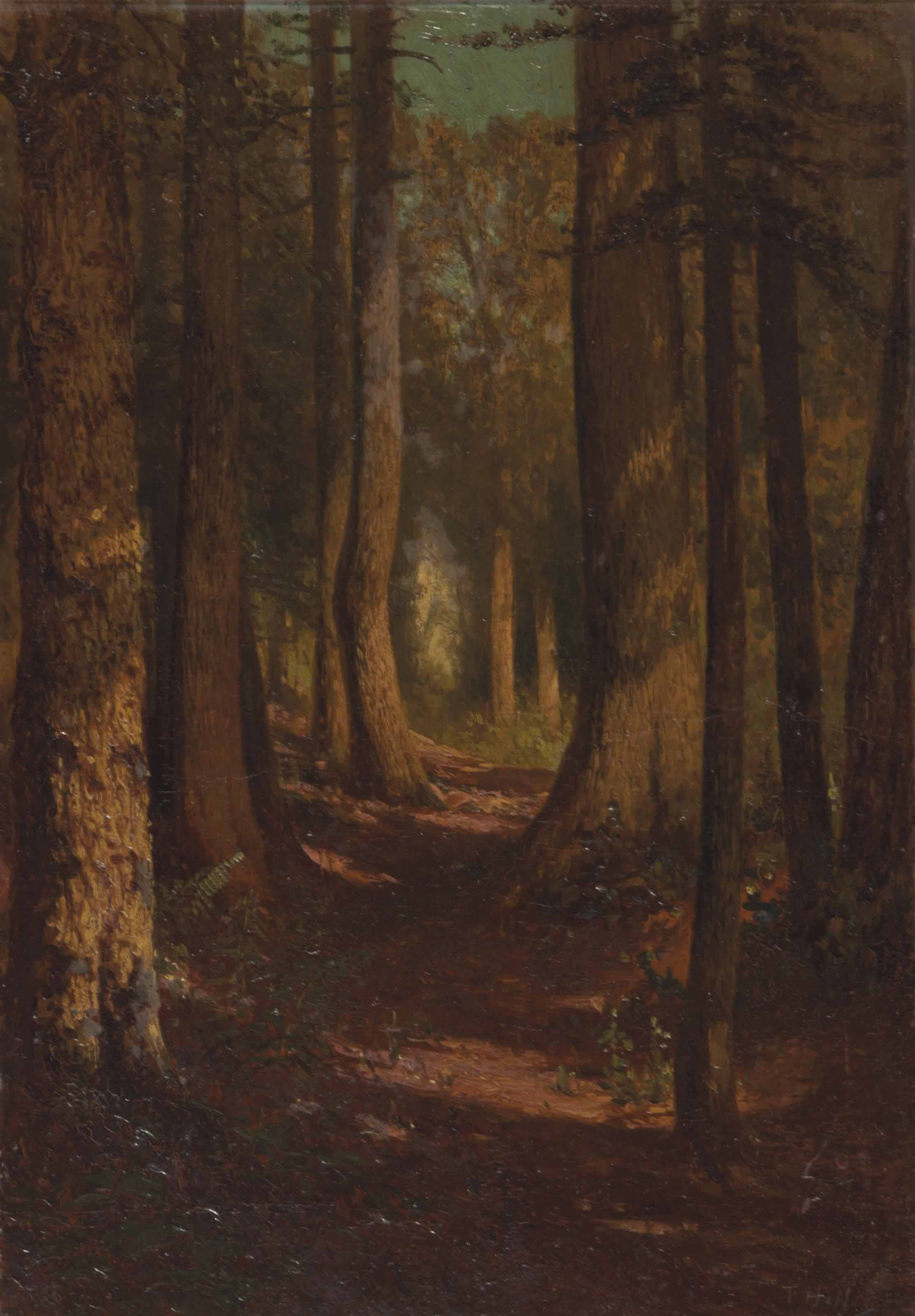 A tree lined path through the woods