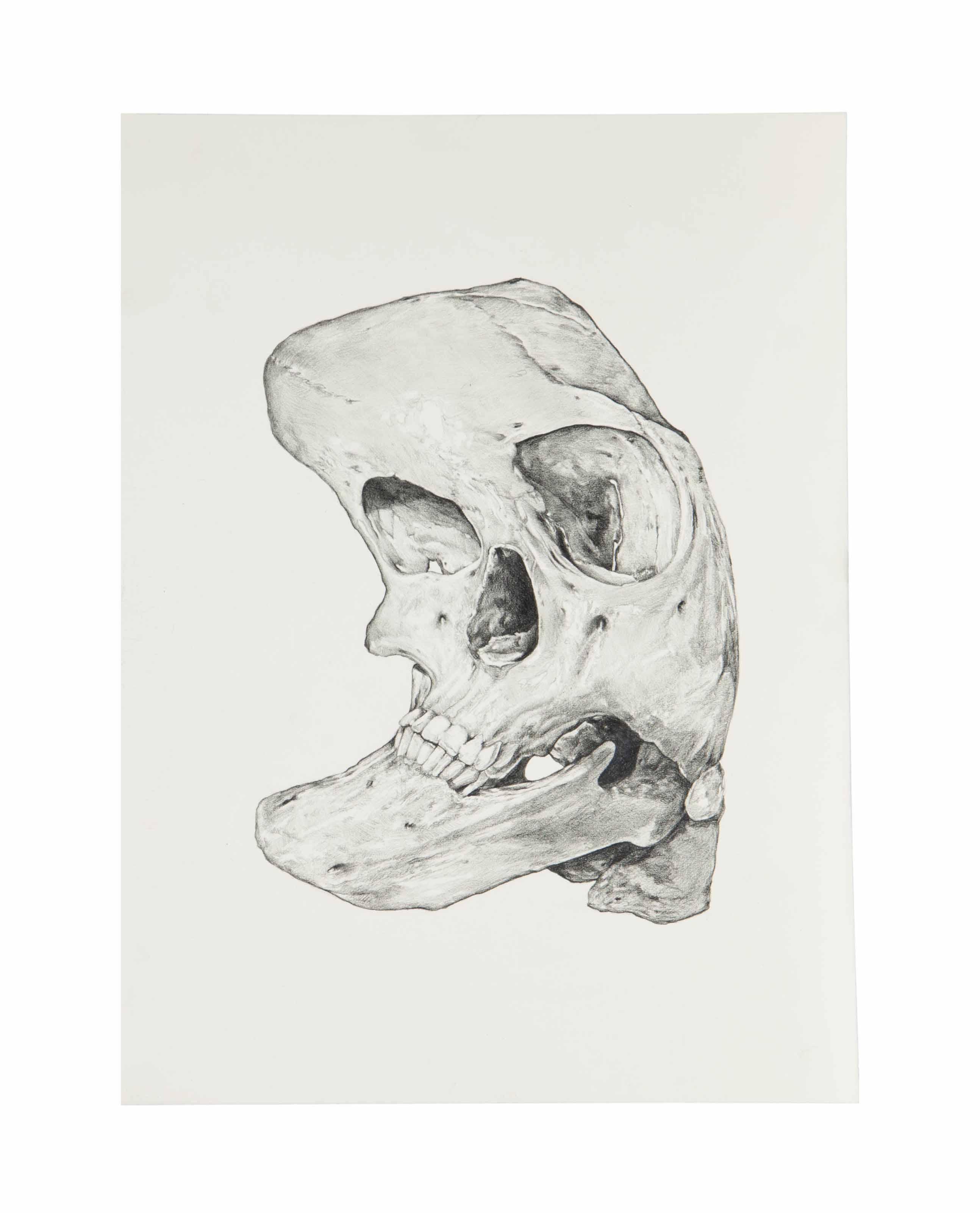 Curved Skull