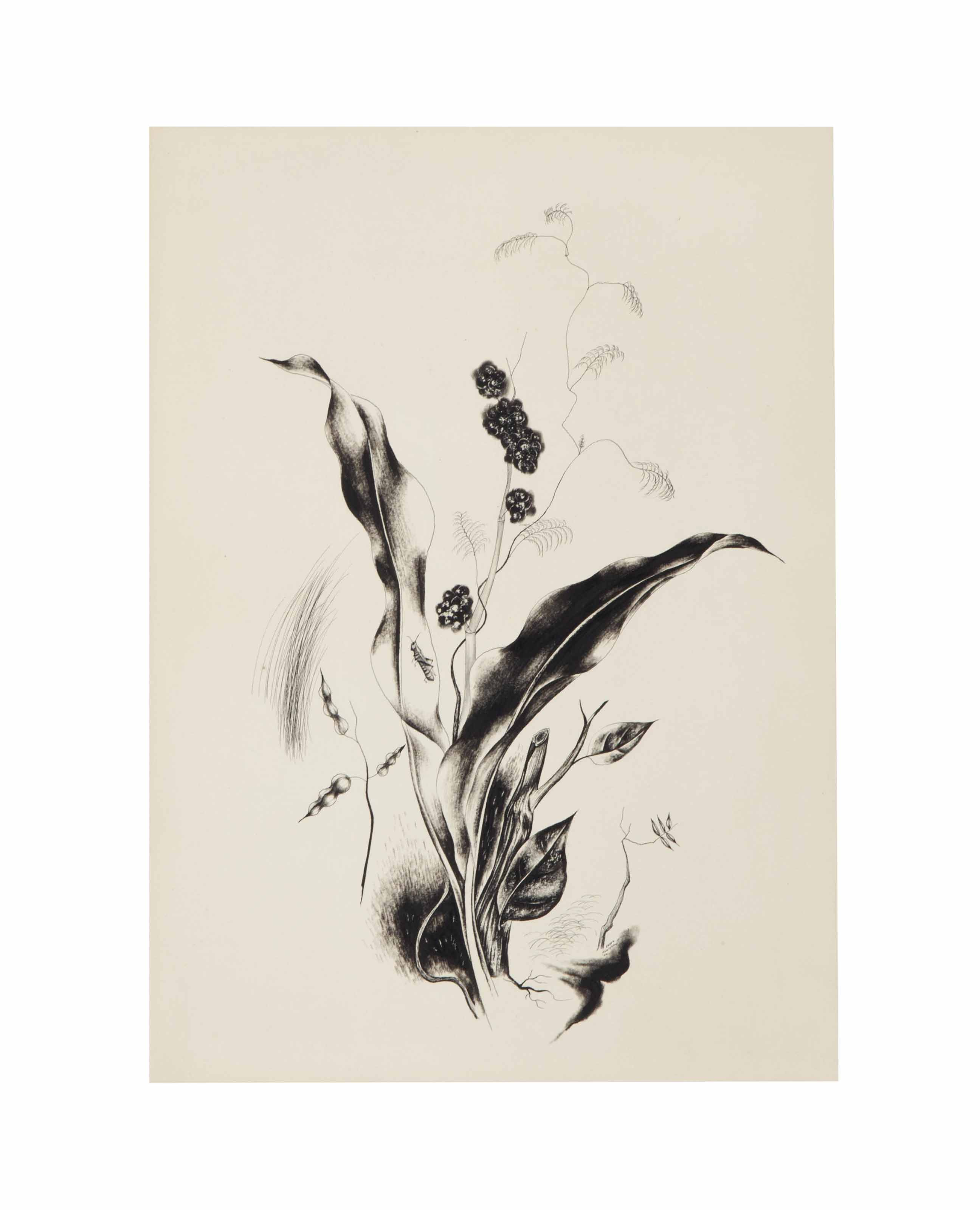 Untitled (Flower and Insect)