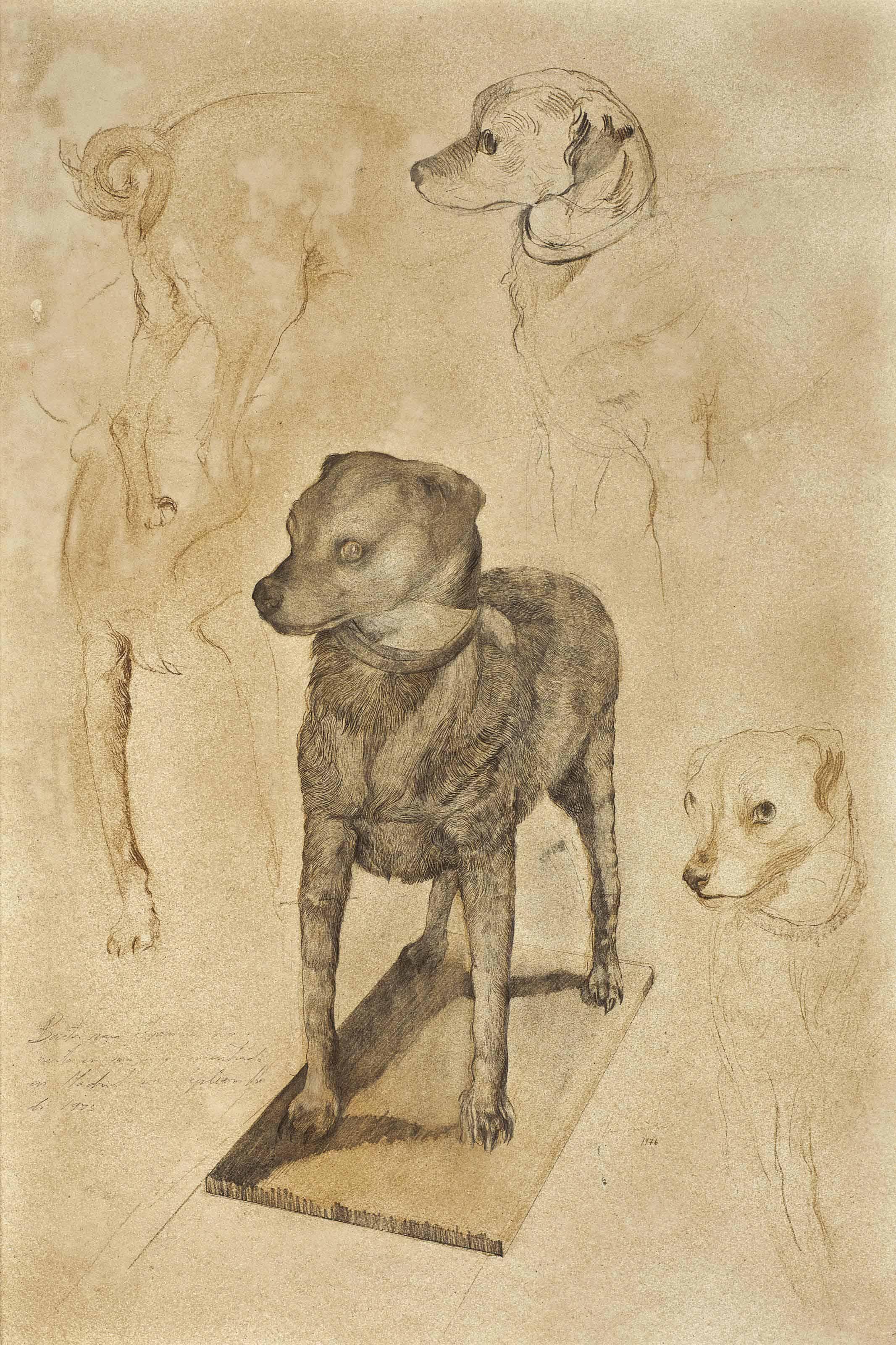 Drawings of the Stuffed Dog
