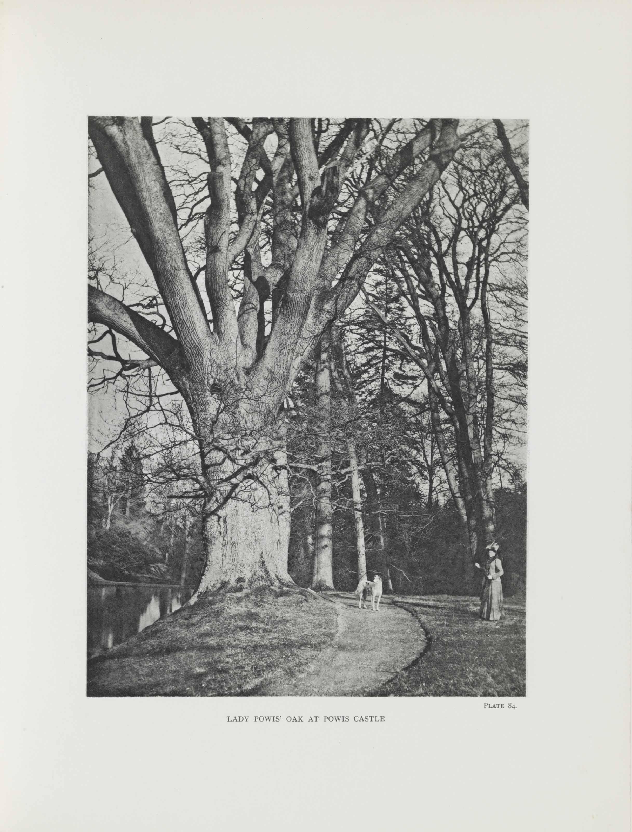 ELWES, Henry John (1846-1922)