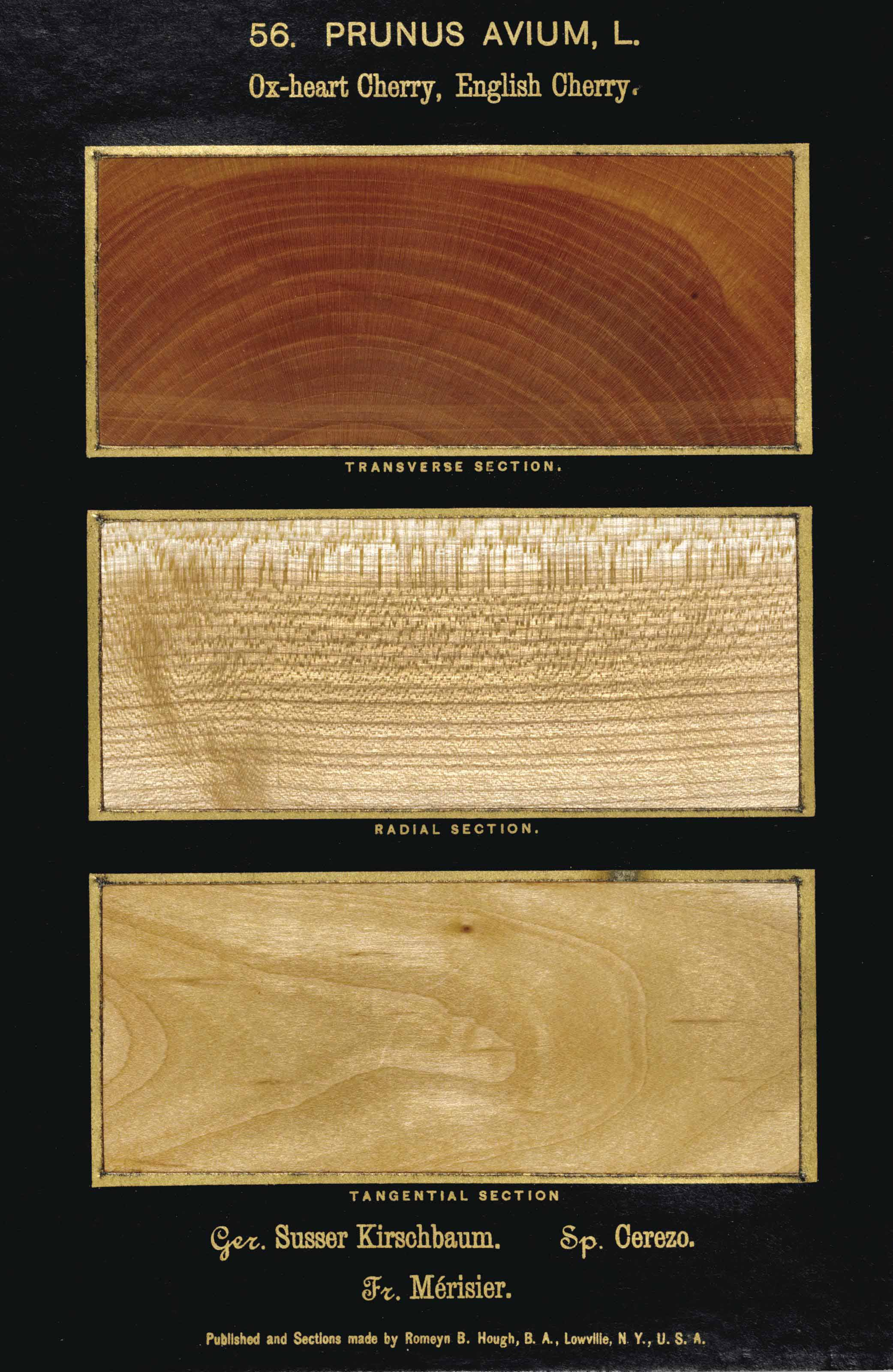 HOUGH, Romeyn Beck (1857-1924). The American Woods, exhibited by actual specimens and with copious explanatory text. Lowville, NY: By the Author, 1894-1928.