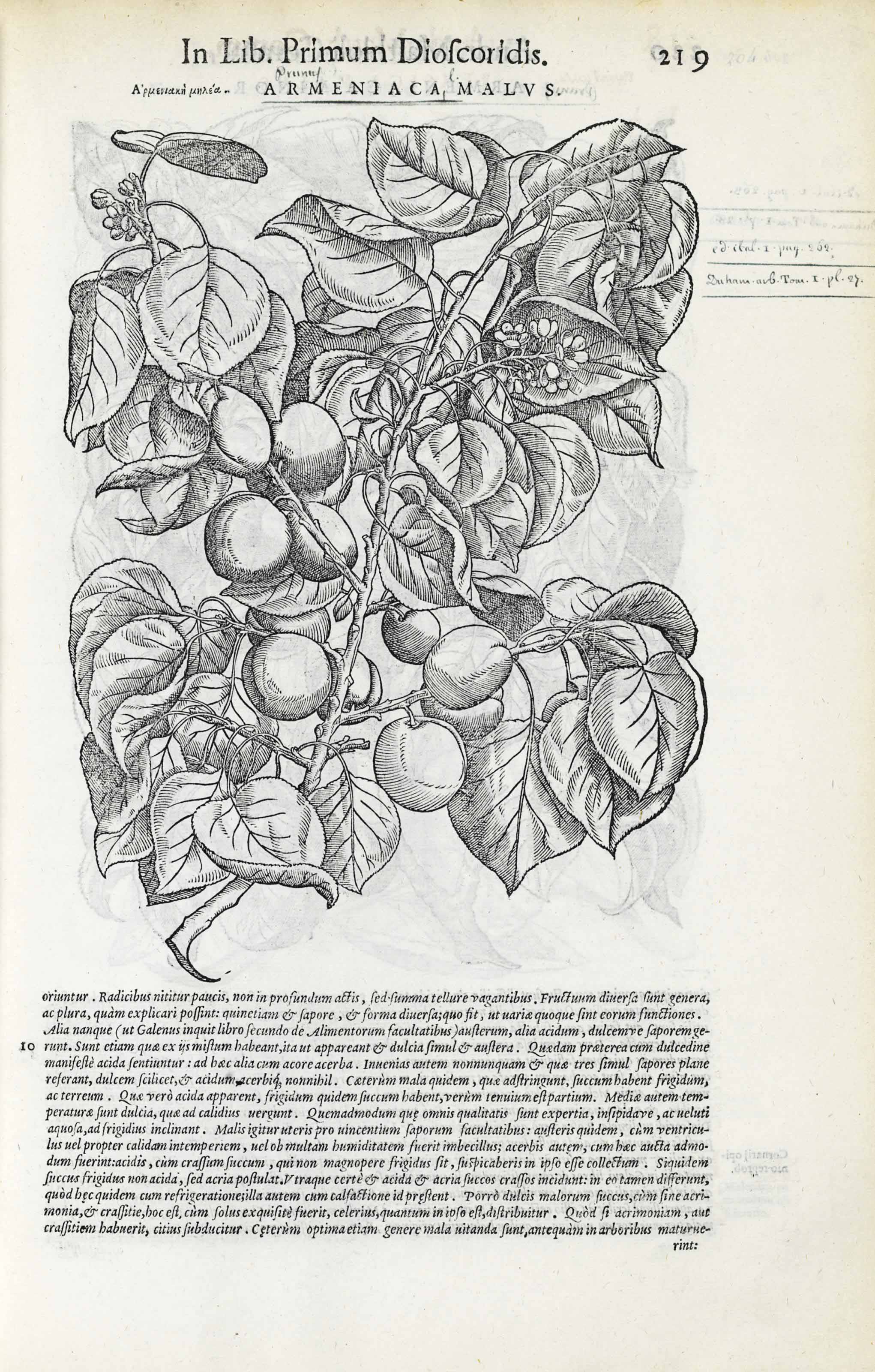 MATTIOLI, Pietro Andrea (1500-