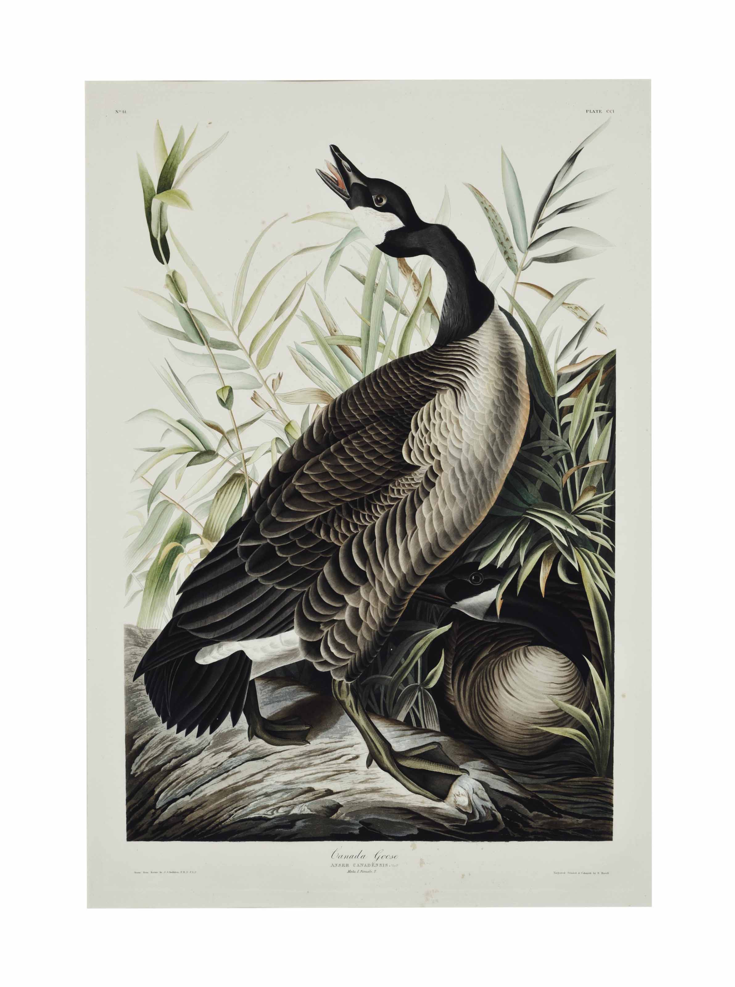 canada goose collection 2014