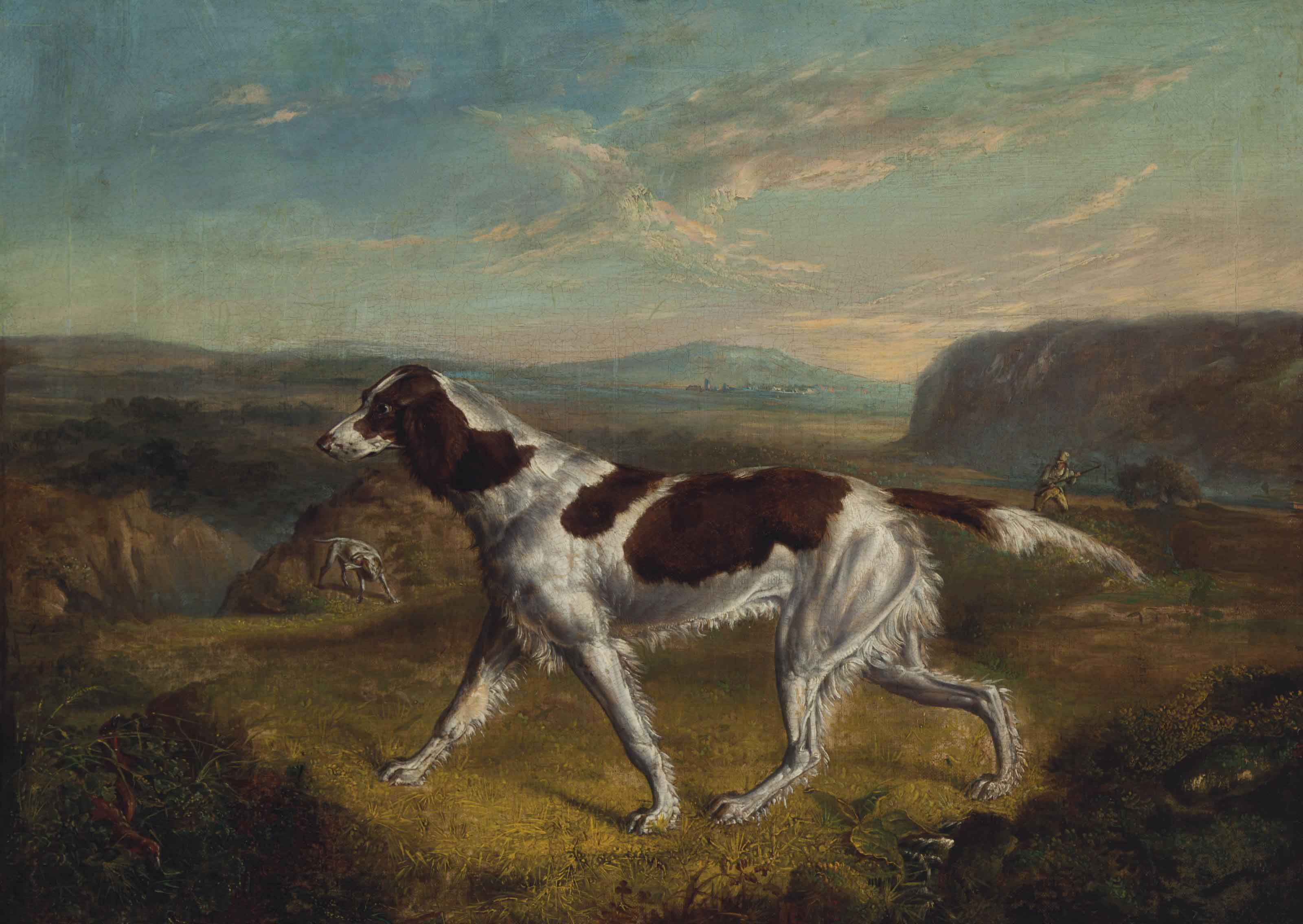 Pointer on a Grouse Moor