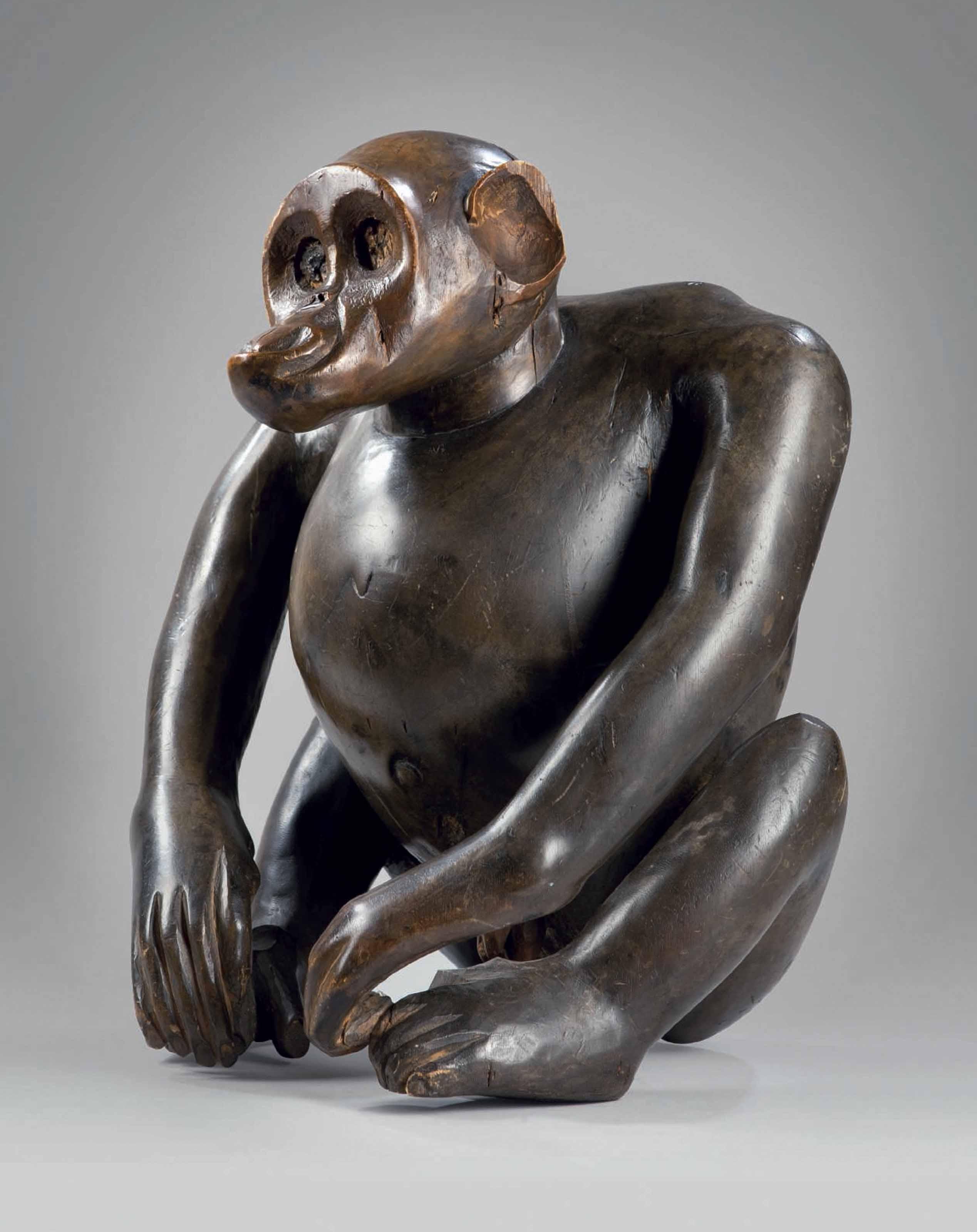Singe Fang, bulu Fang monkey,