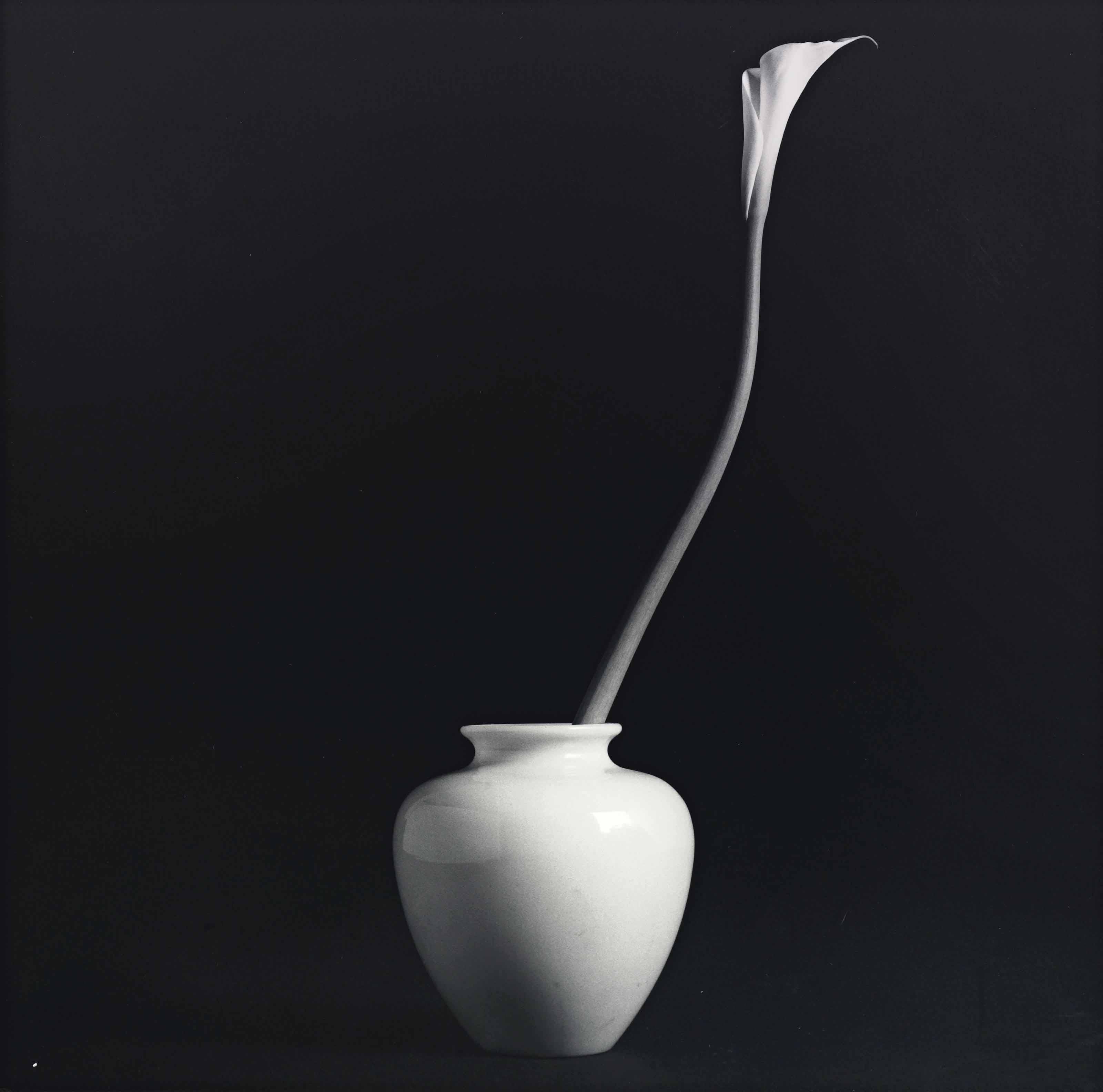 Calla Lily, 1985