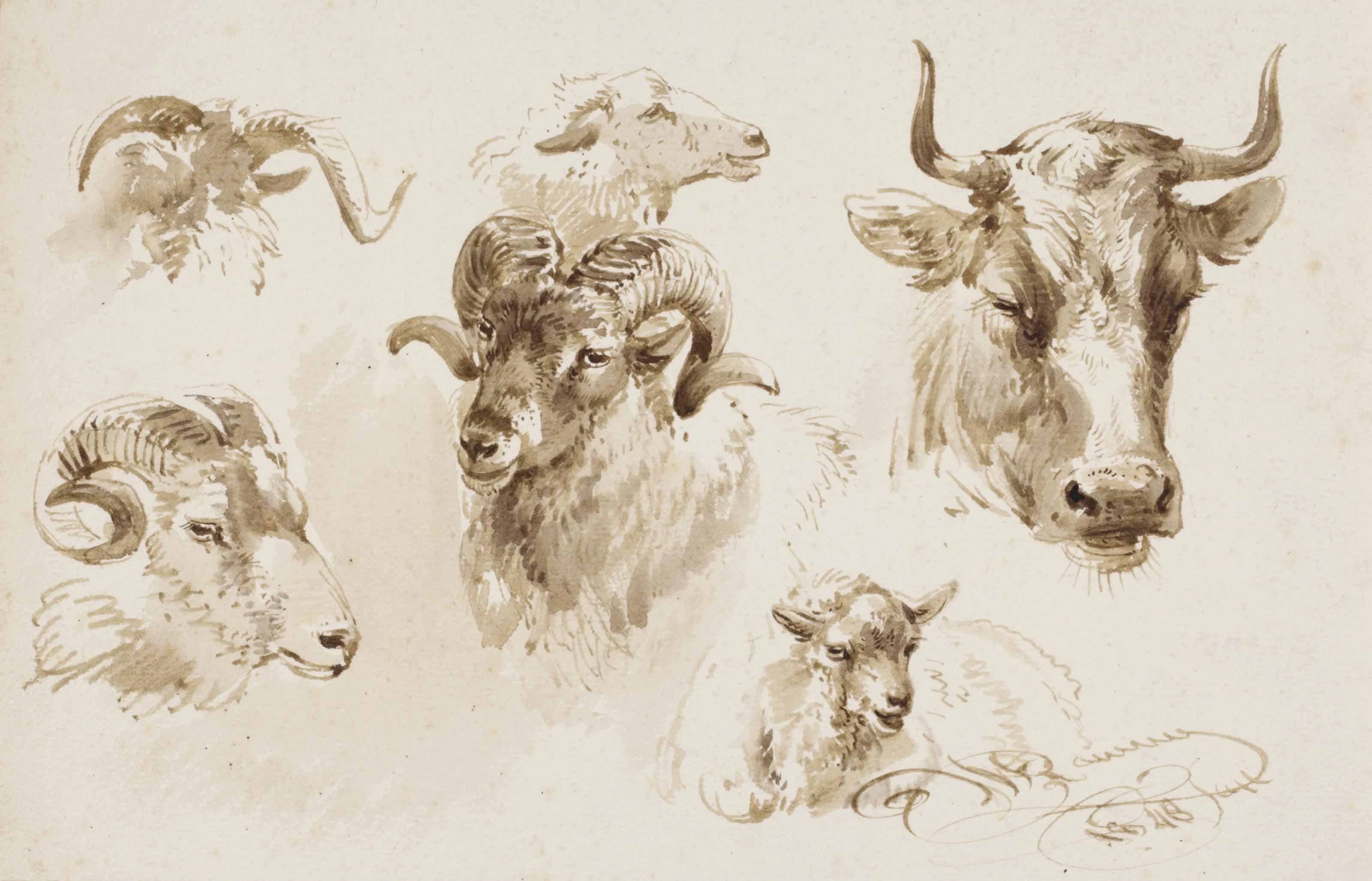 Studies of the heads of sheep and a cow