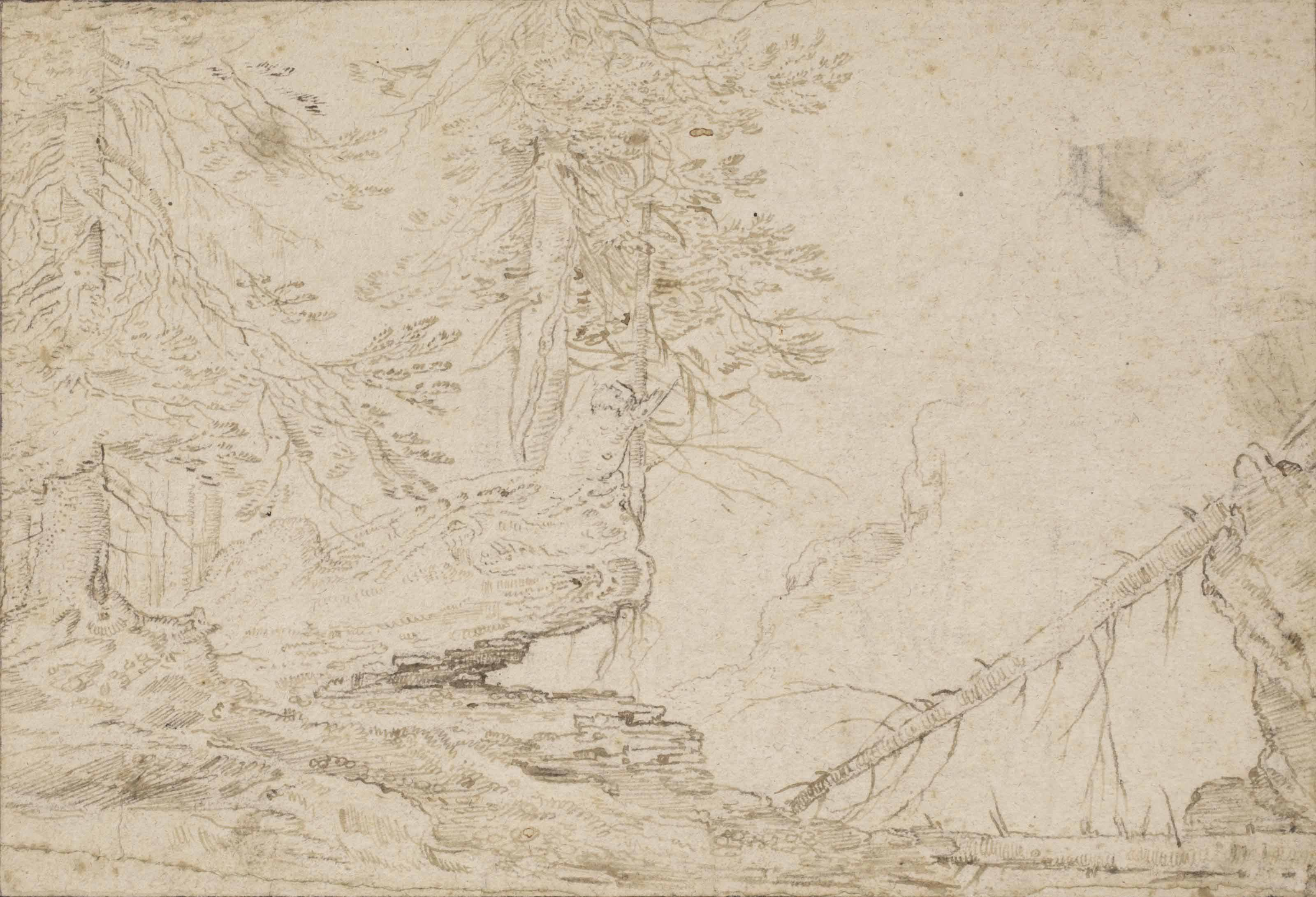 A wooded landscape with fir trees
