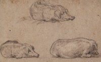 Three studies of a recumbent pig