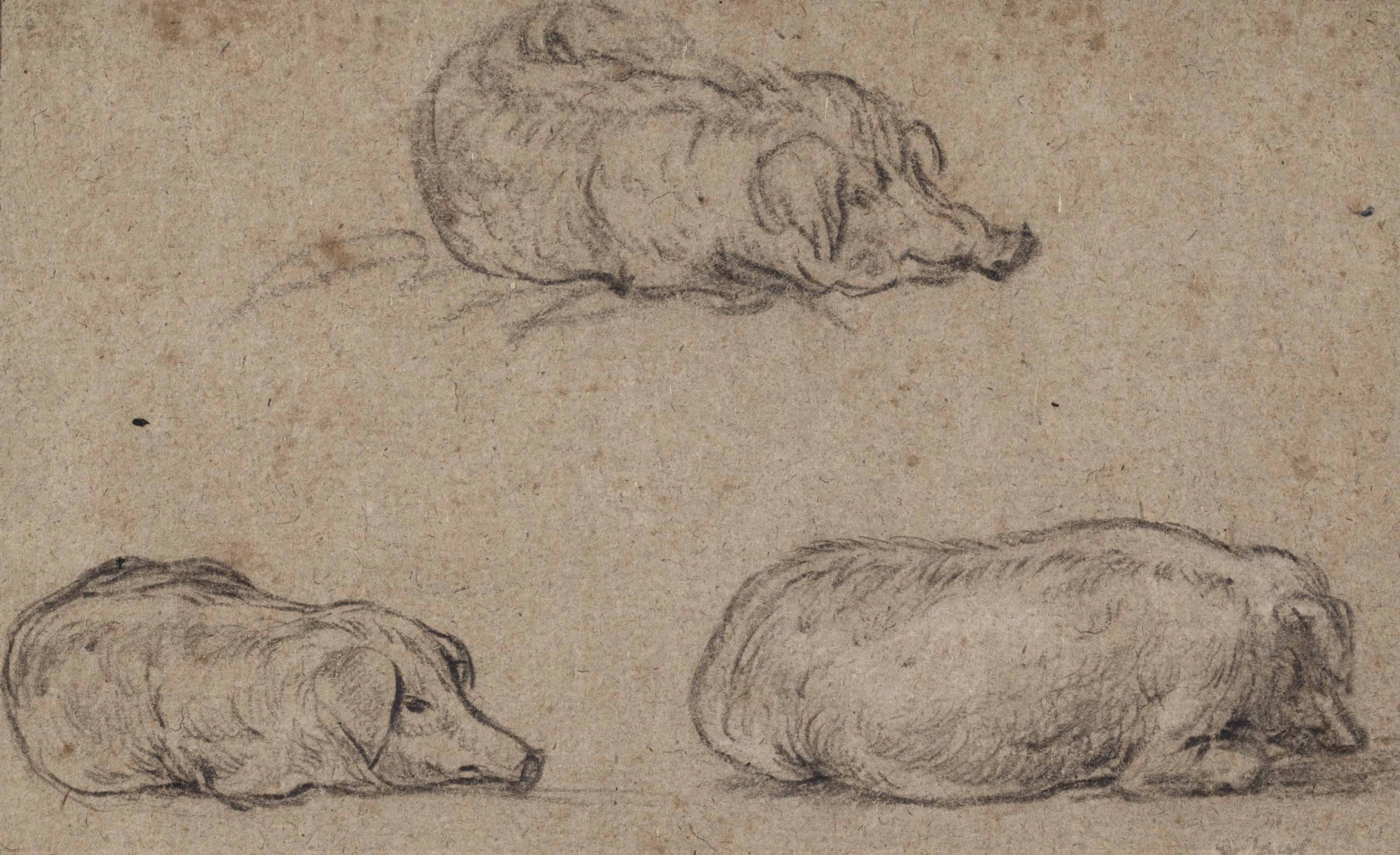 Three studies of a recumbent pig