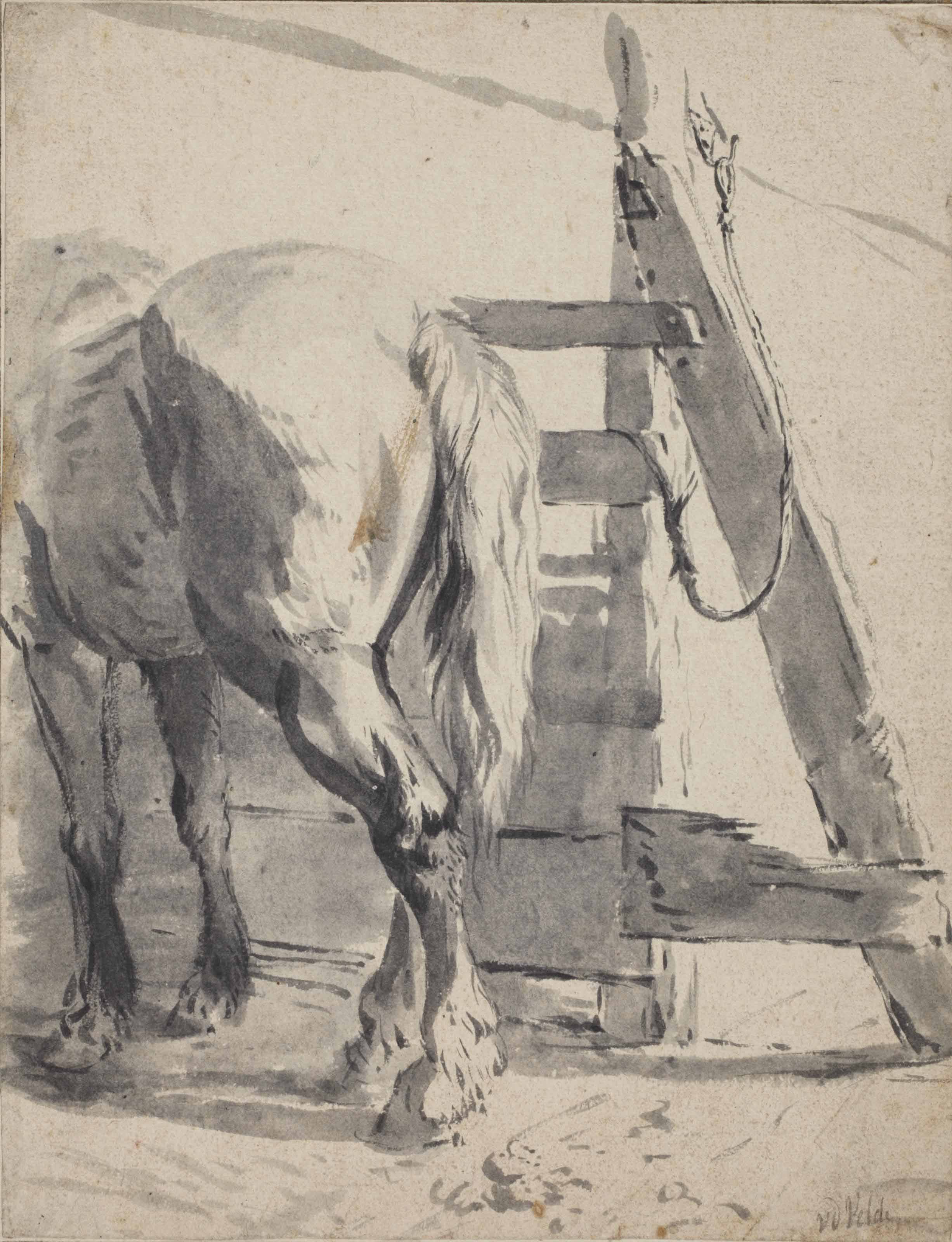 A horse seen from behind