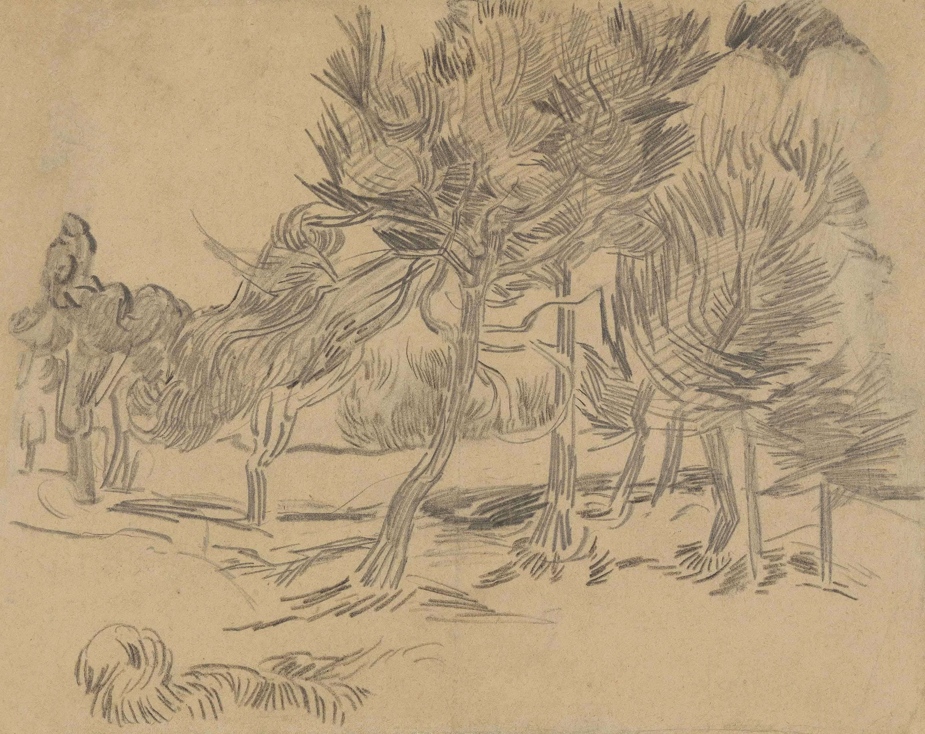 Vincent Van Gogh 1853 1890 Groupe De Pins Late 19th
