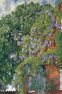 Wisteria at Englefield