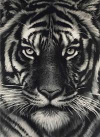 Untitled (Last Tiger)