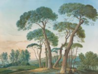A group of stone pines near Tivoli, seen from Villa Adriana