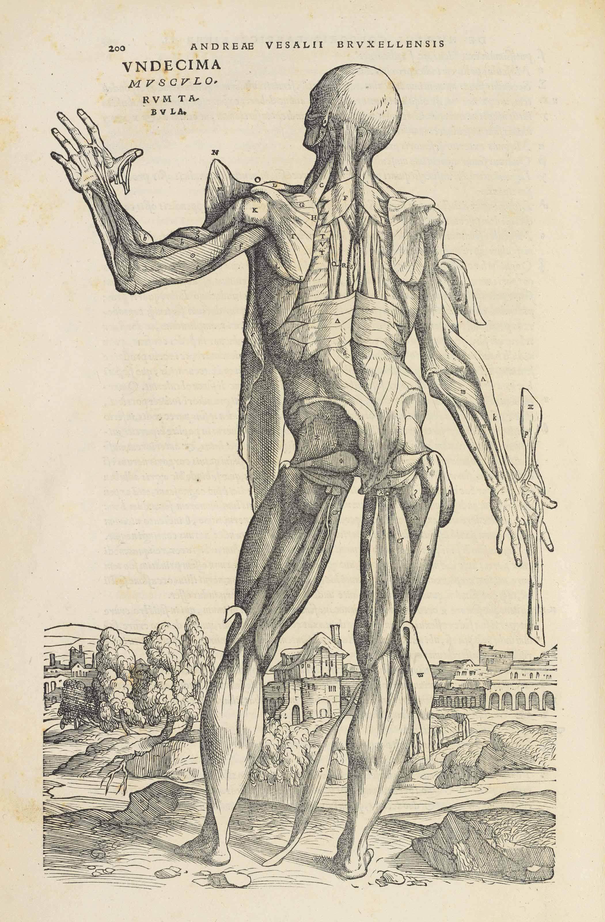 VESALIUS, Andreas (1514-1564). De humani corporis fabrica libri septem. Basel: Johannes Oporinus, June 1543.