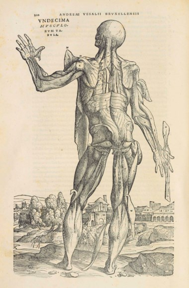 Andreas Vesalius (1514-1564) De humani corporis fabrica libri septem. Basel, June 1543. Sold for £254,500 on 1 December 2015 at Christie's in London