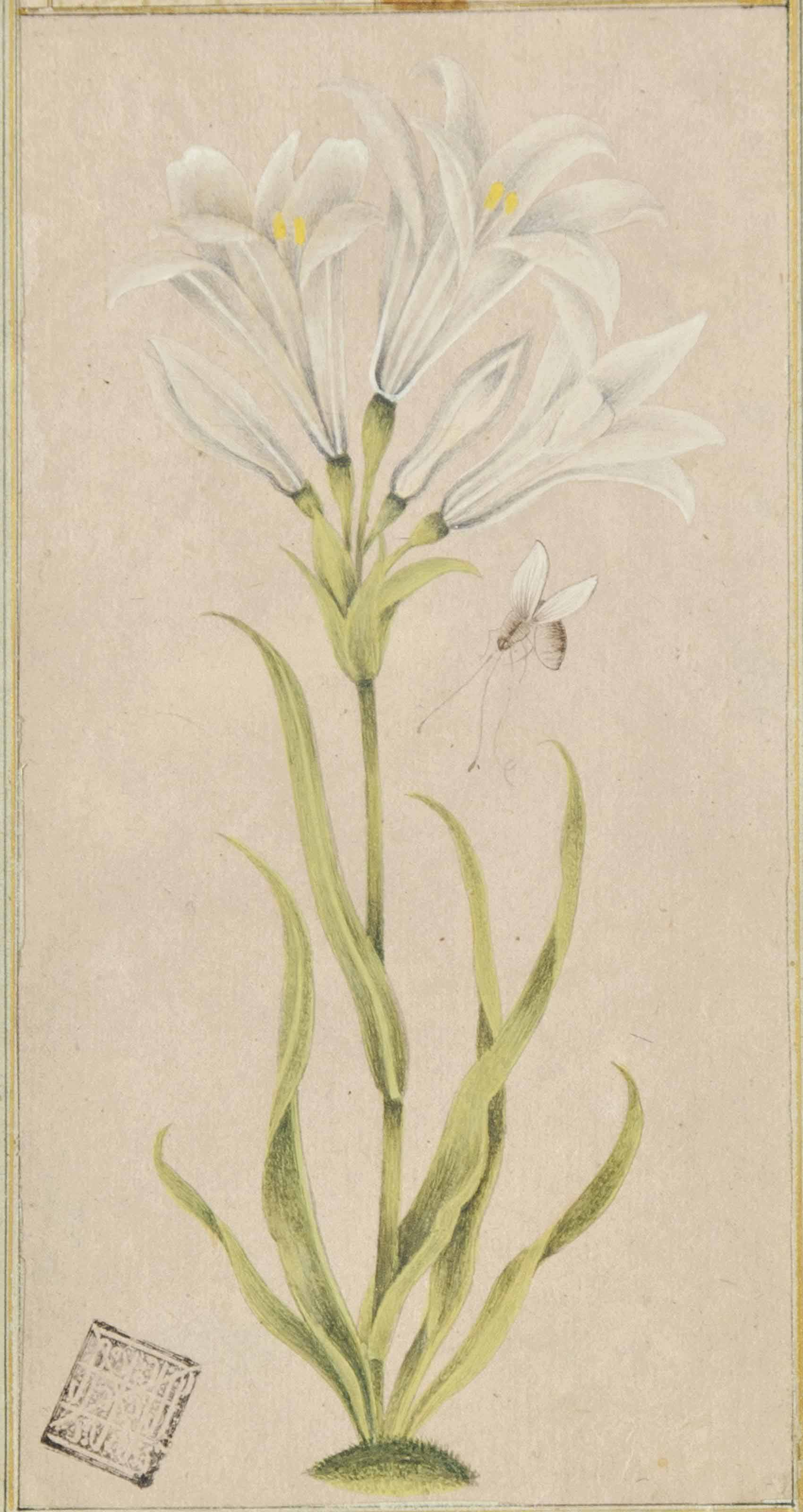 A BOTANICAL PAINTING OF A LILY AND A BEE