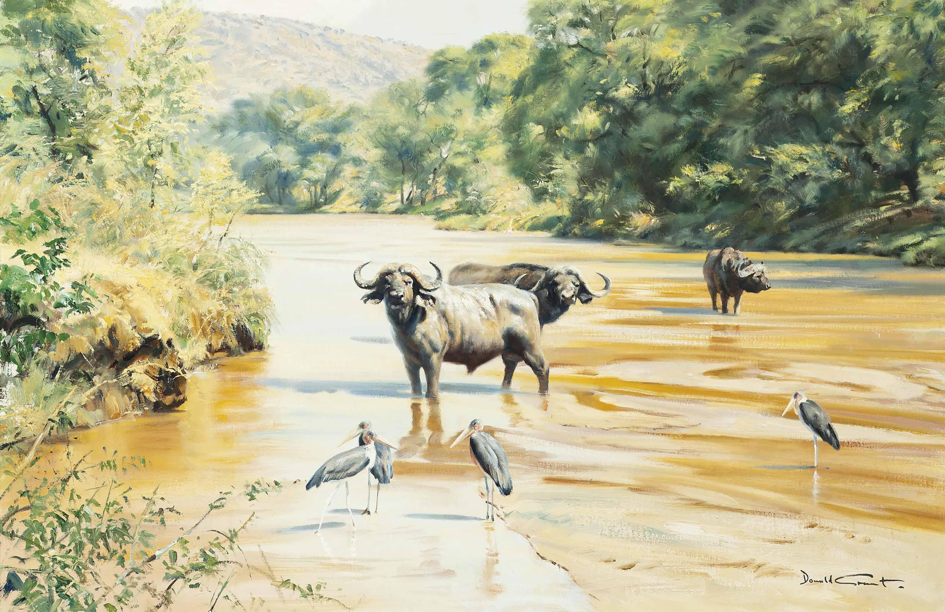 Cape buffalo with maribou stork