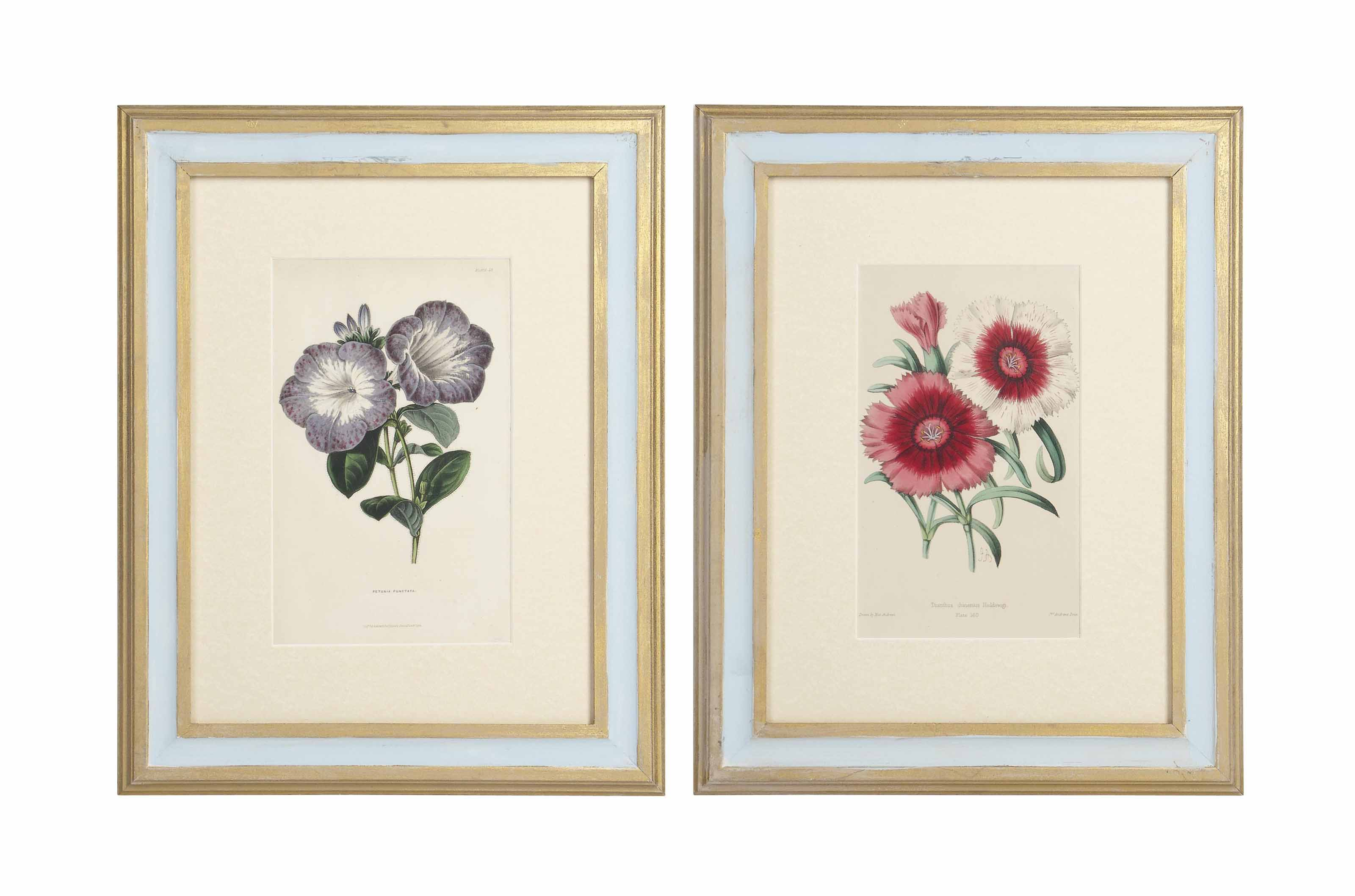 TWELVE ENGRAVINGS OF FLOWERS