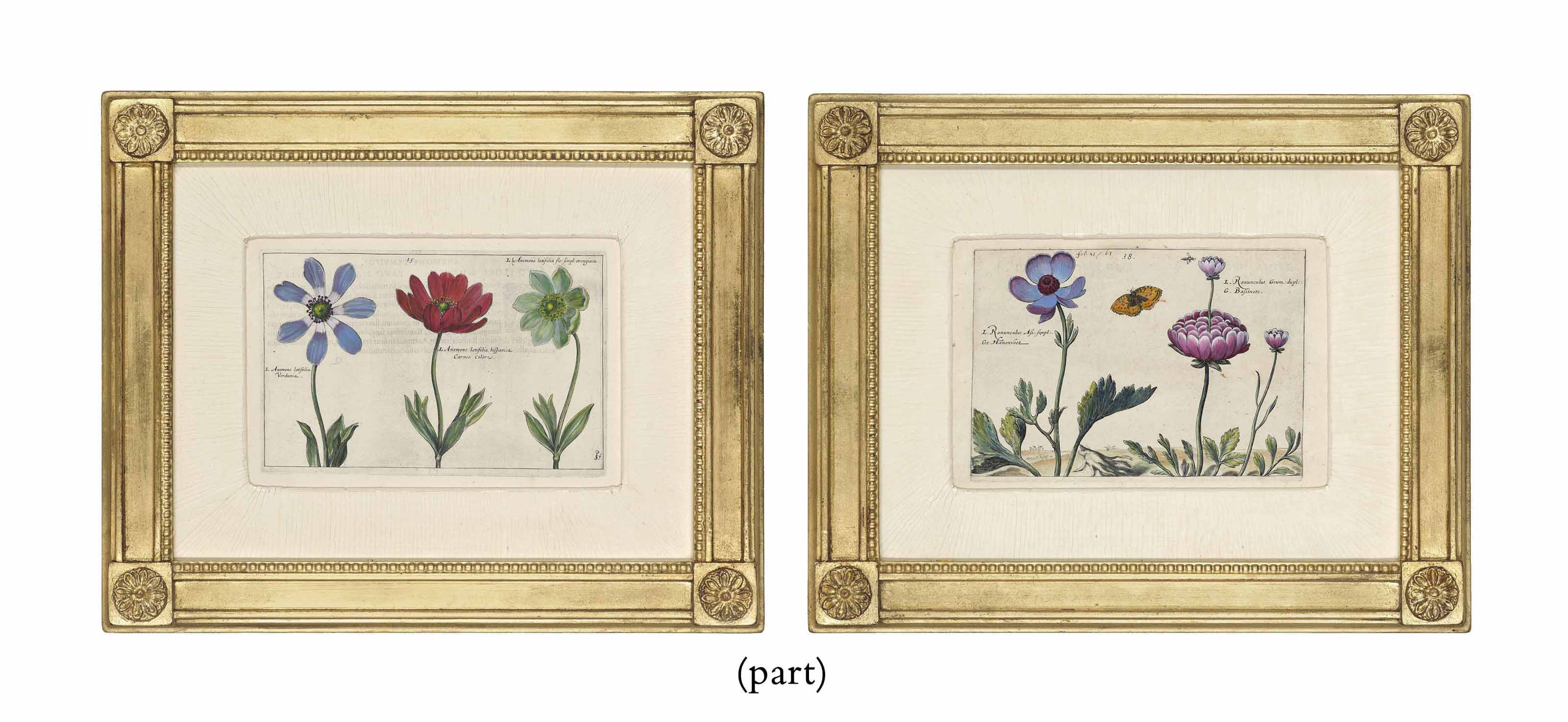 EIGHT HAND-COLOURED BOTANICAL