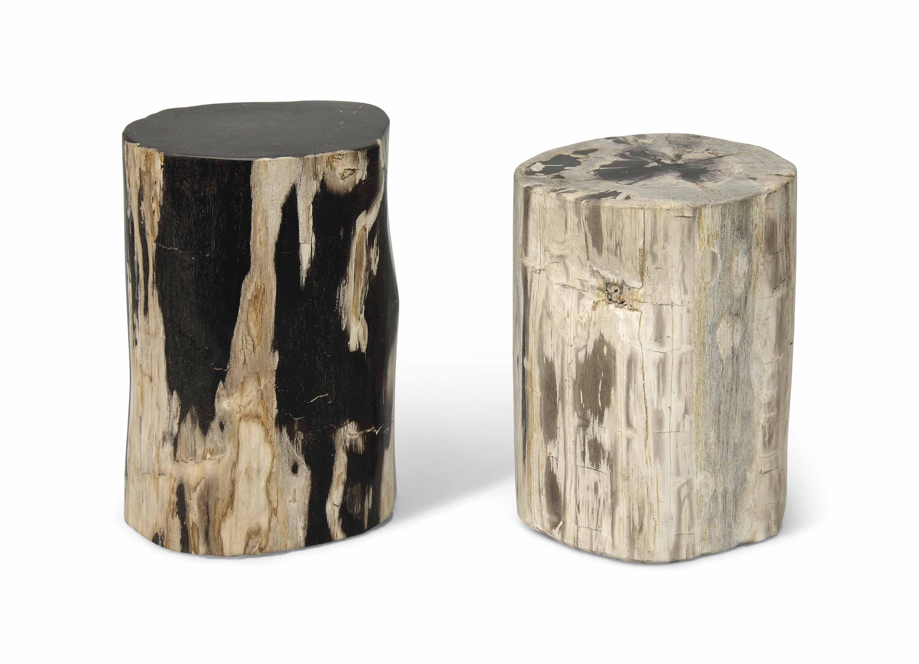 TWO PETRIFIED WOOD TREE SPECIM