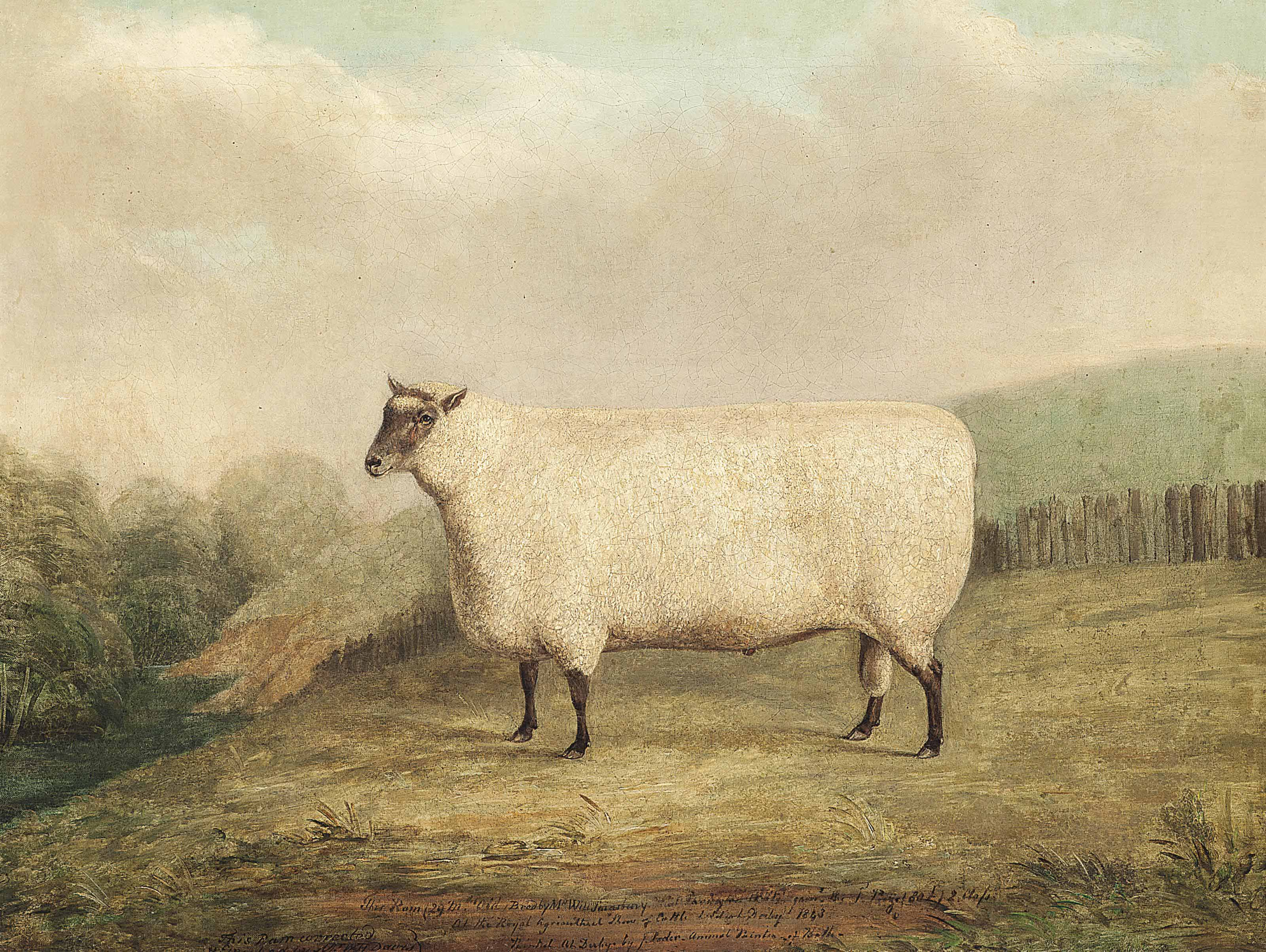 A prize ram bred by Mr. William Sainsbury