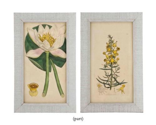 TWELVE ENGRAVINGS OF FLOWERS