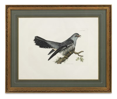 FOUR ENGRAVINGS OF BIRDS FROM