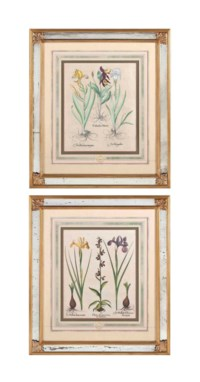 THREE LARGE HAND-COLOURED GERMAN ENGRAVINGS FROM 'HORTUS EYSTETTENSIS'
